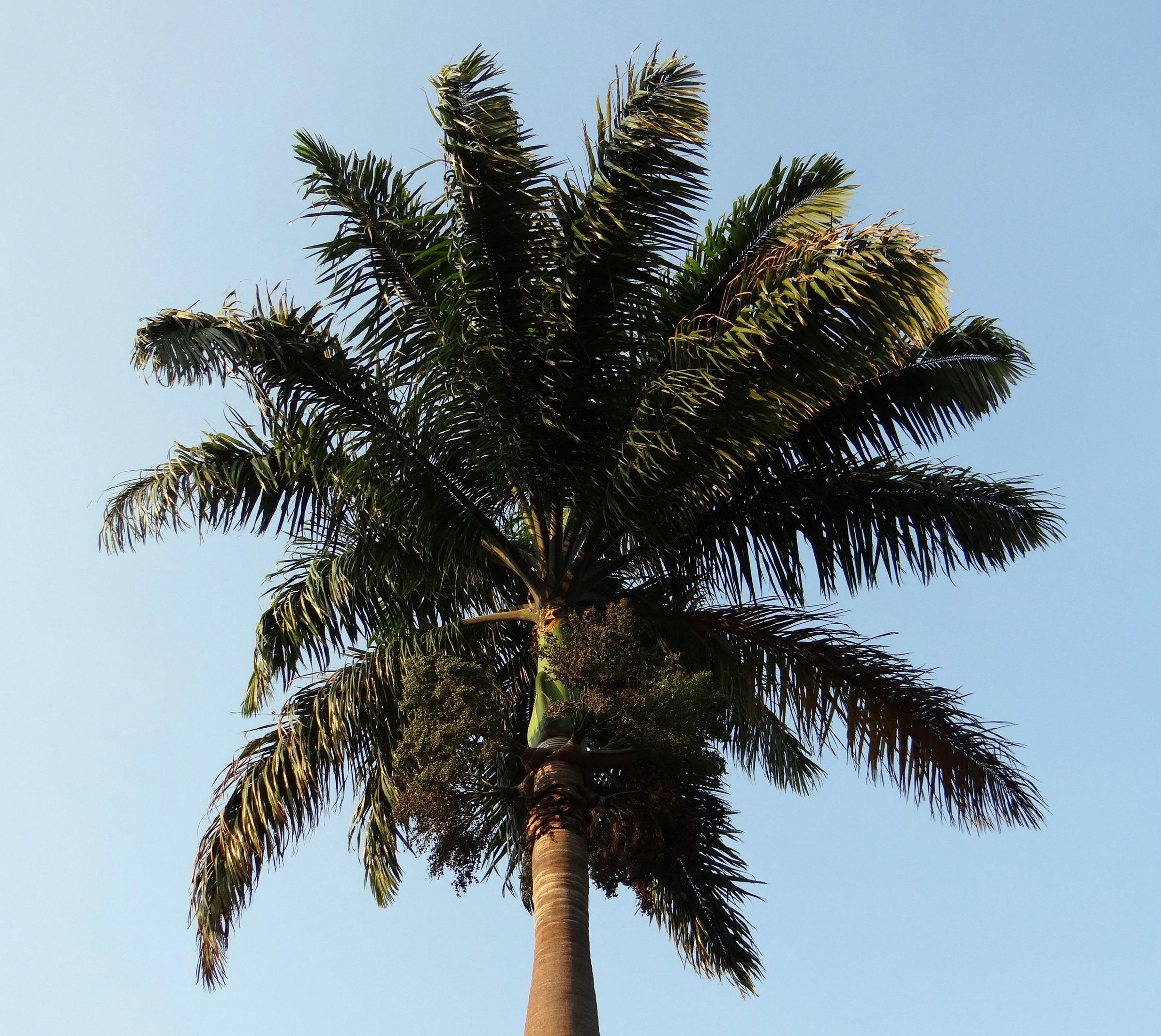 Dating i Palme ørken ca