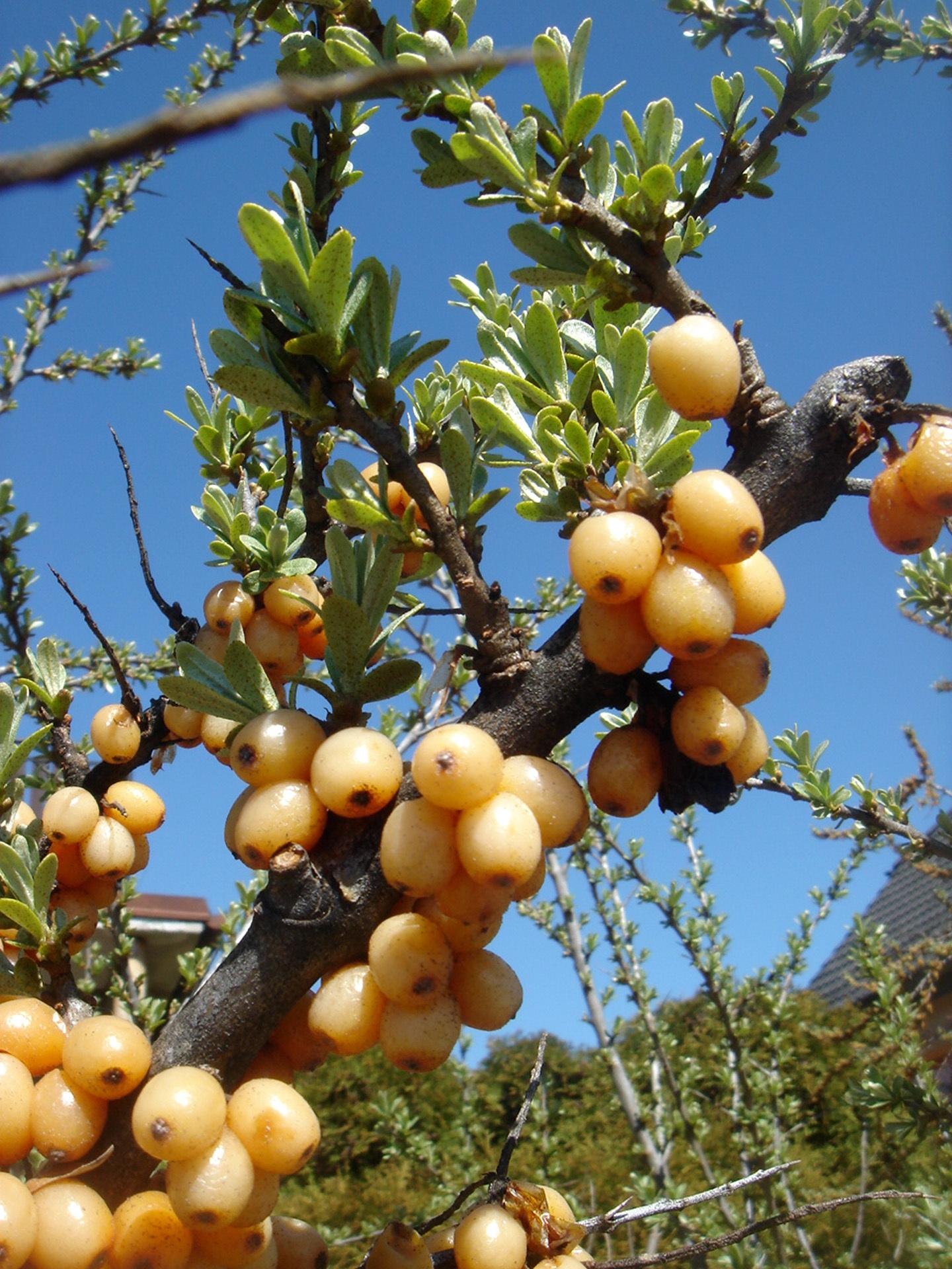 сказке андерсена картинка плоды и цветы на одном дереве примеру, брать ипотеку