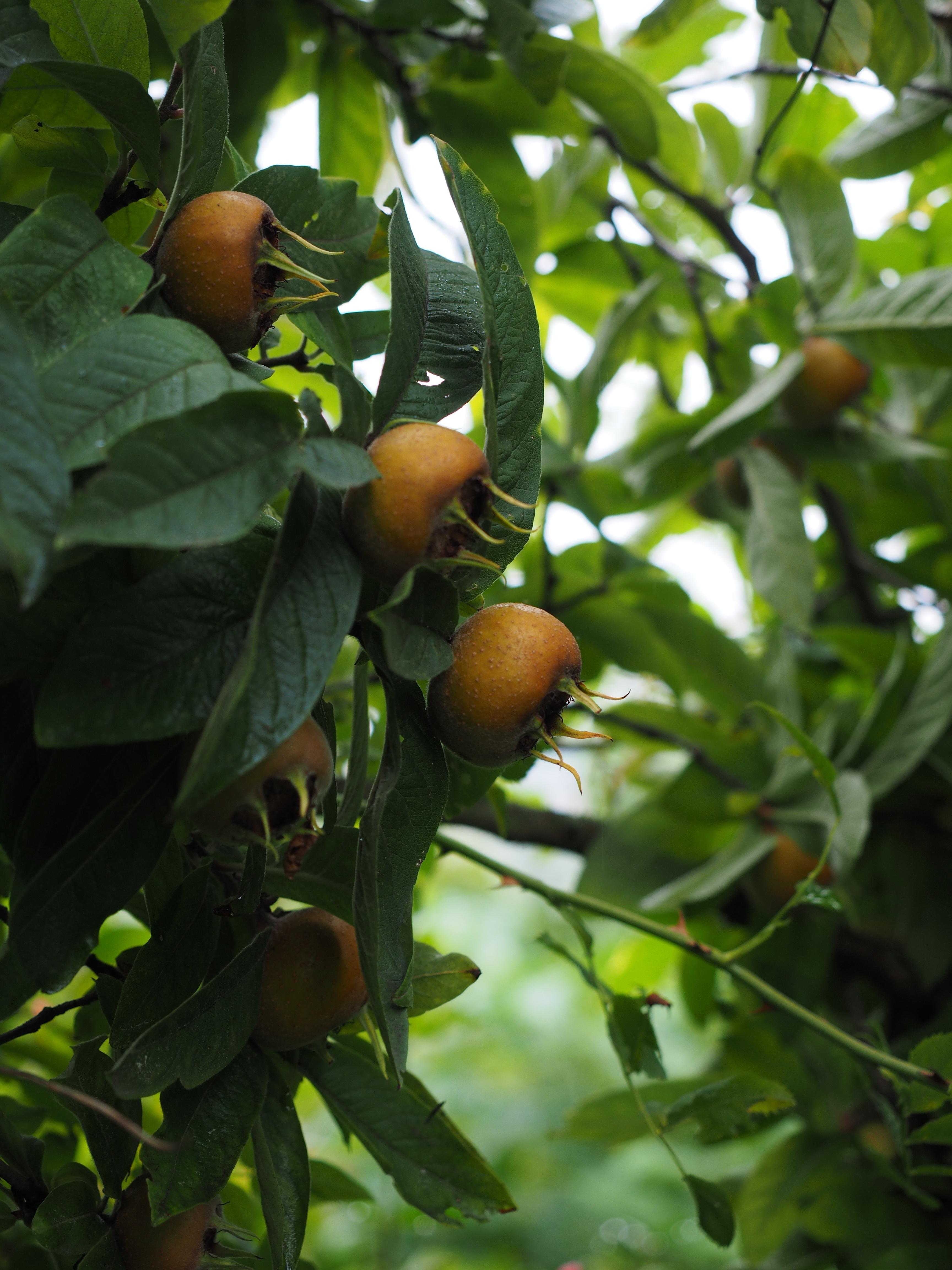 Images gratuites arbre branche fruit feuille fleur for Plante jungle