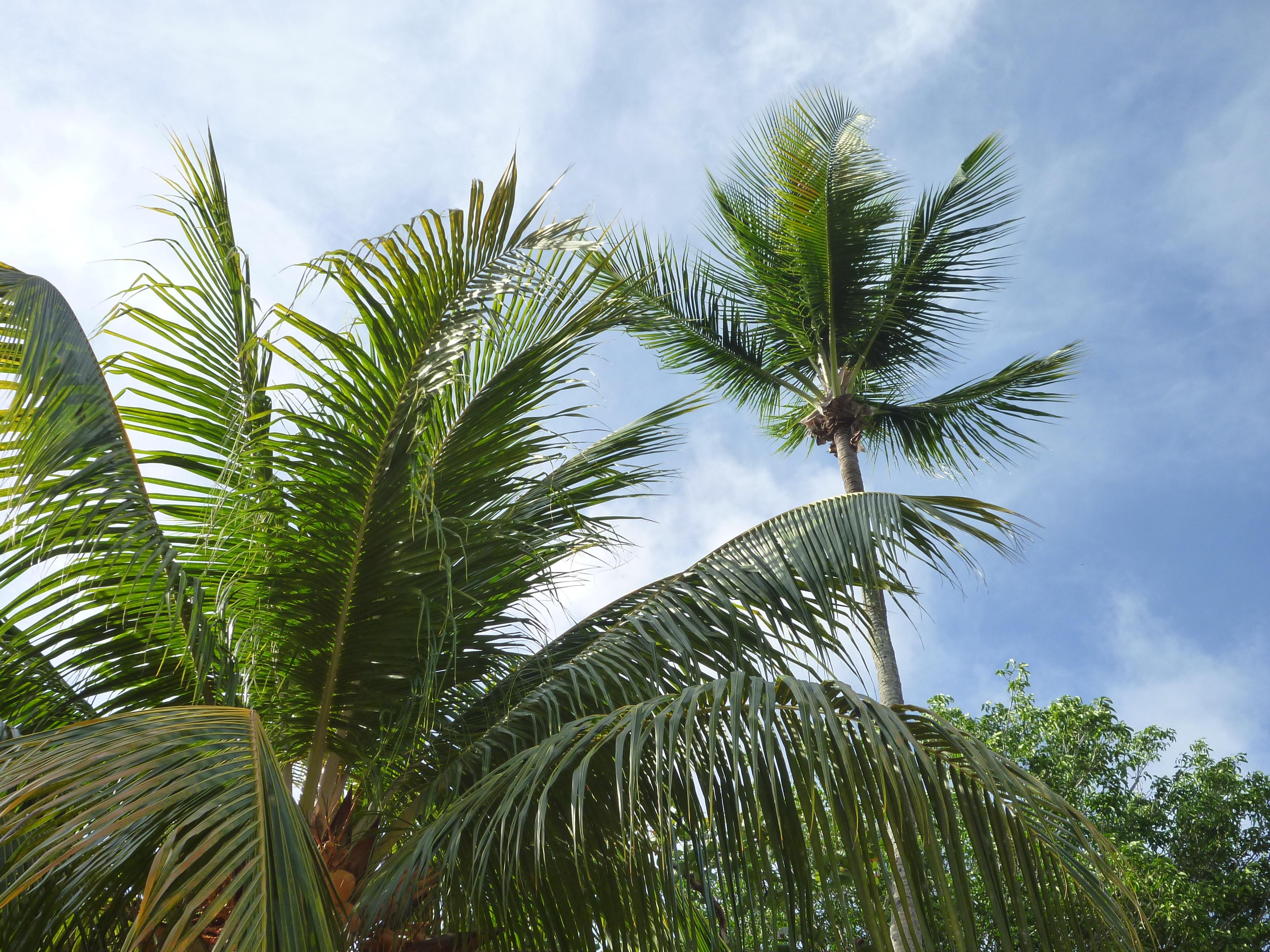 фото папоротники пальмы бетон, необработанный материал