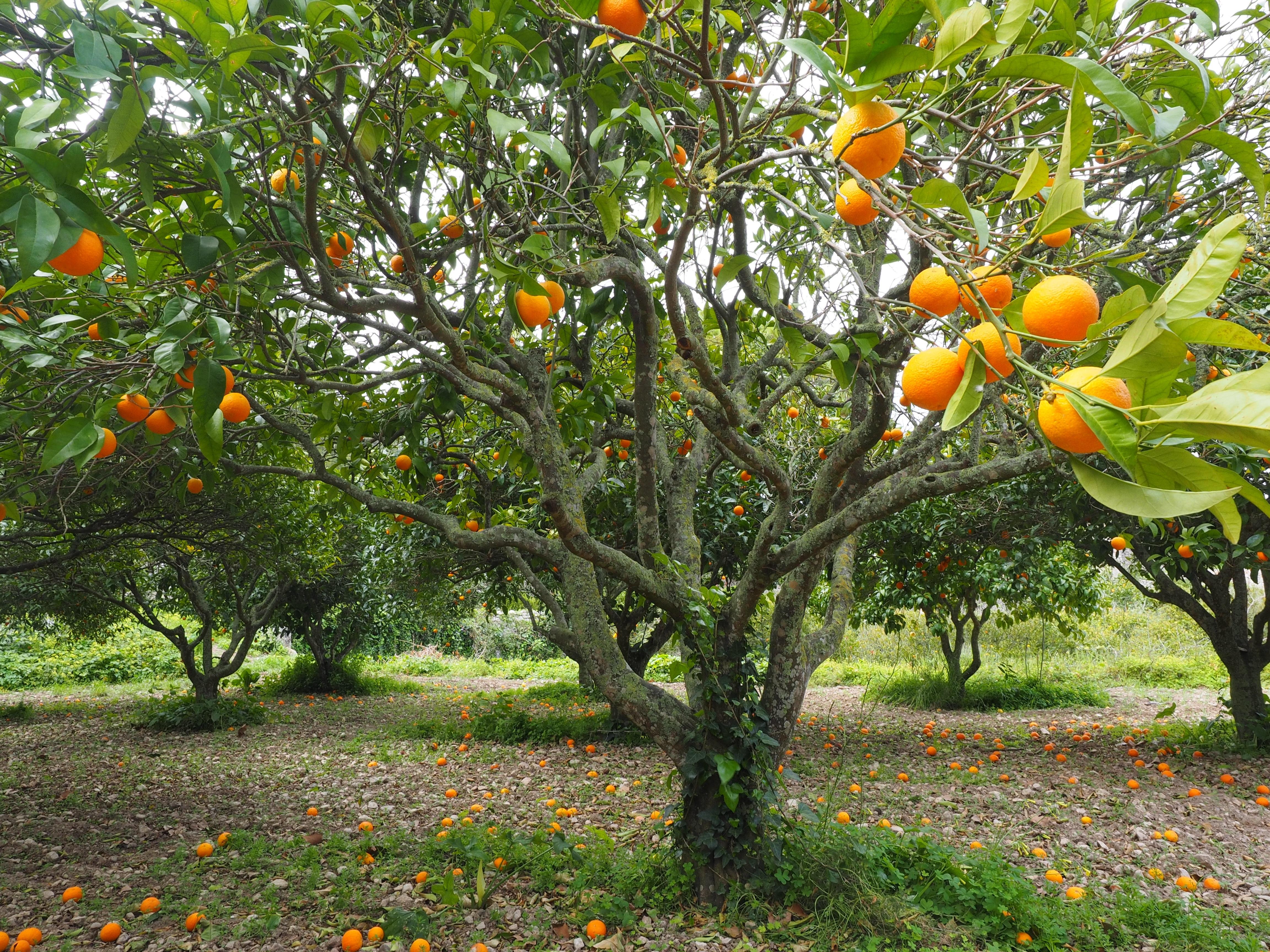 вашего фрукты растут на деревьях картинки те, кто хочет