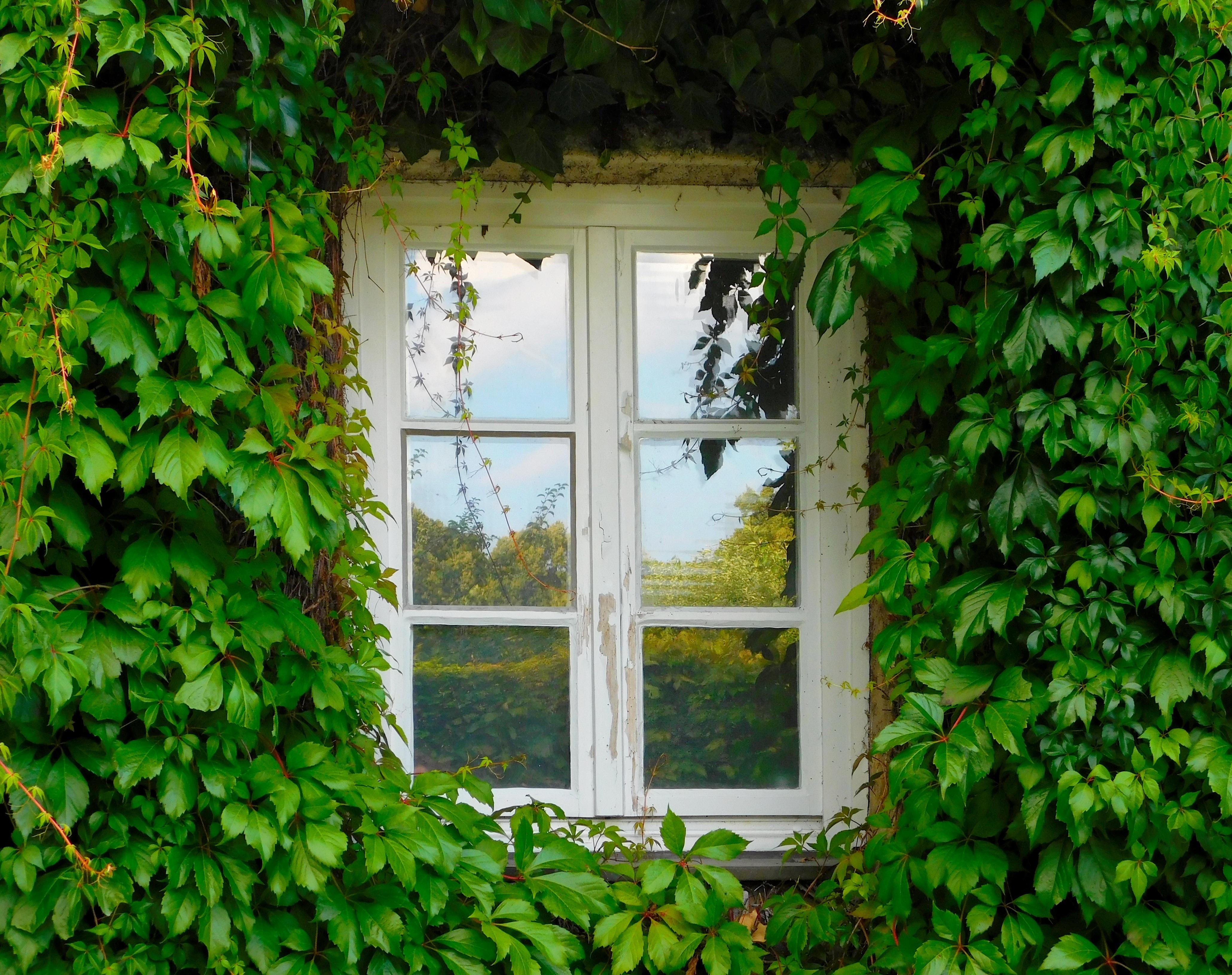паста картинки окна с растениями удобно пользоваться при
