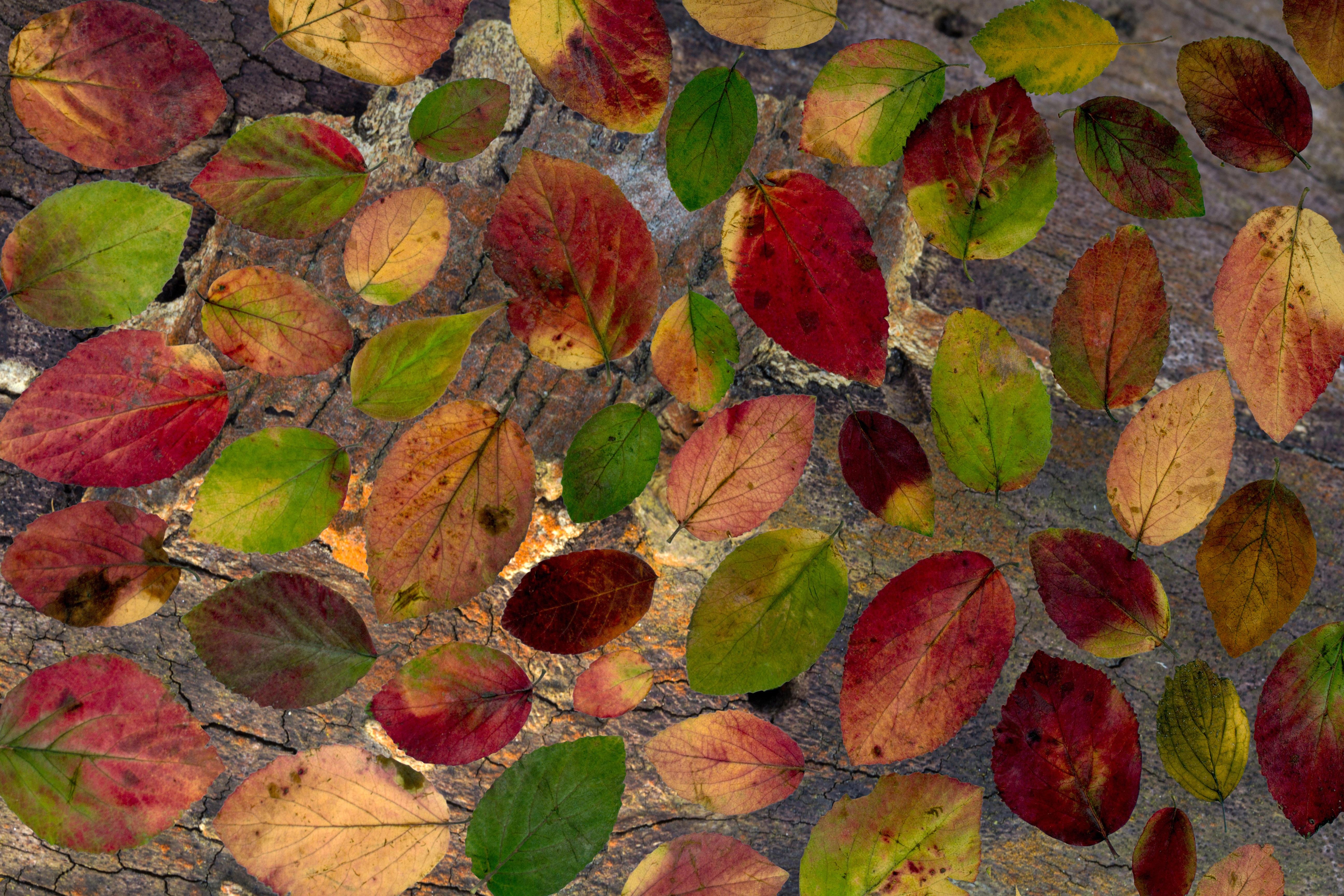 tree branch plant leaf arid flower petal dry foliage pattern red autumn botany colorful flora season maple arrangement leaves design deciduous composition autumn leaf true leaves foliage leaf flowering plant land plant 556517