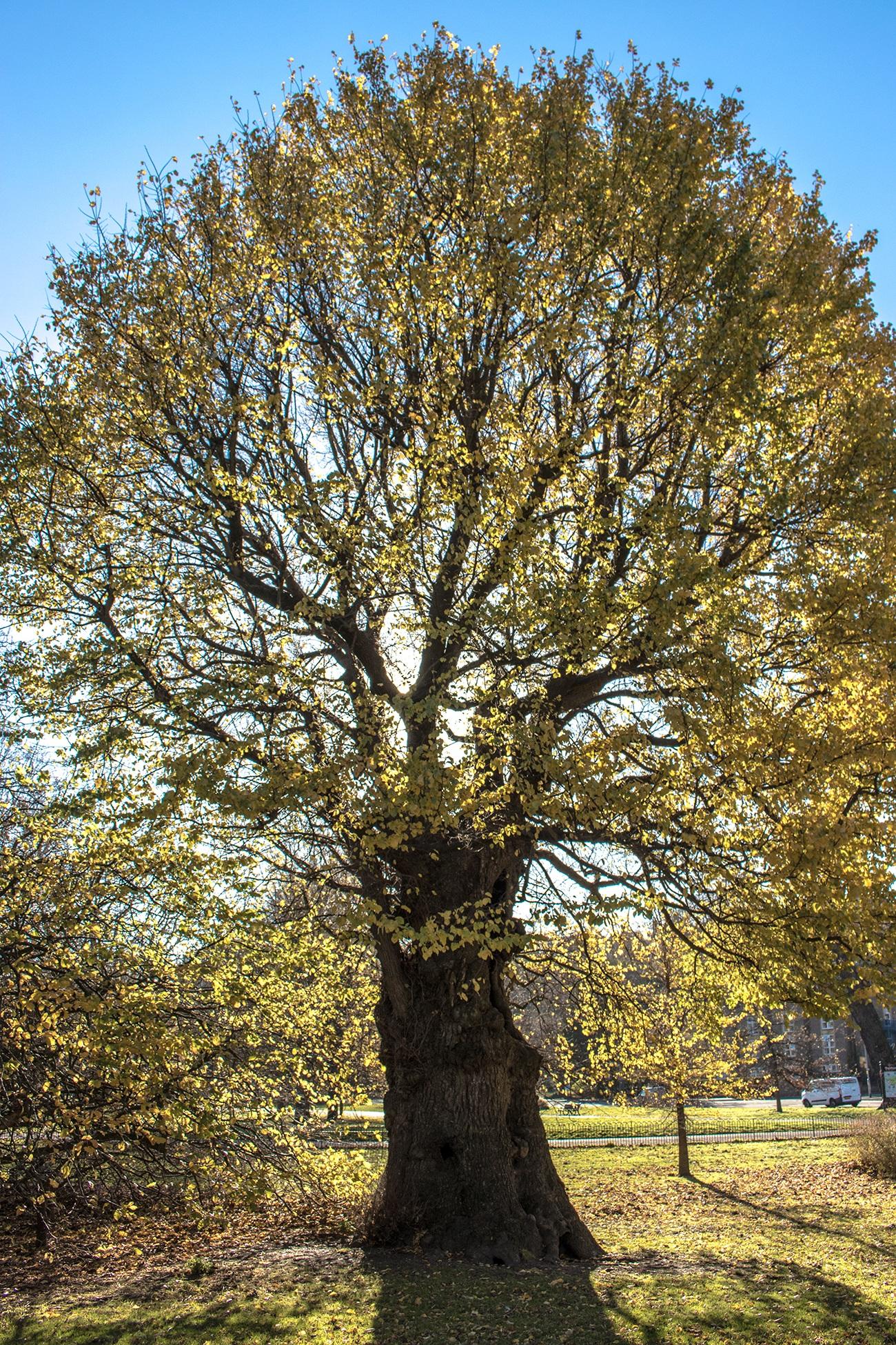 Images gratuites arbre branche feuille l 39 automne - Arbres a feuilles caduques ...