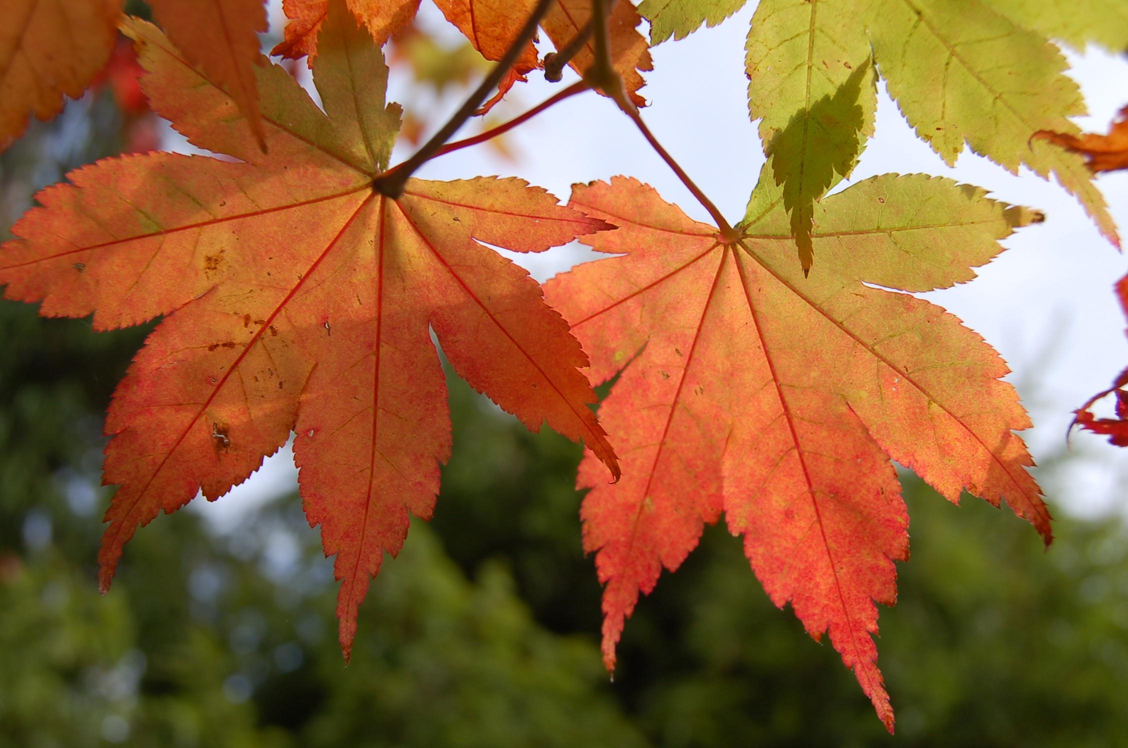 фото осенних листьев деревьев с названиями договоренность