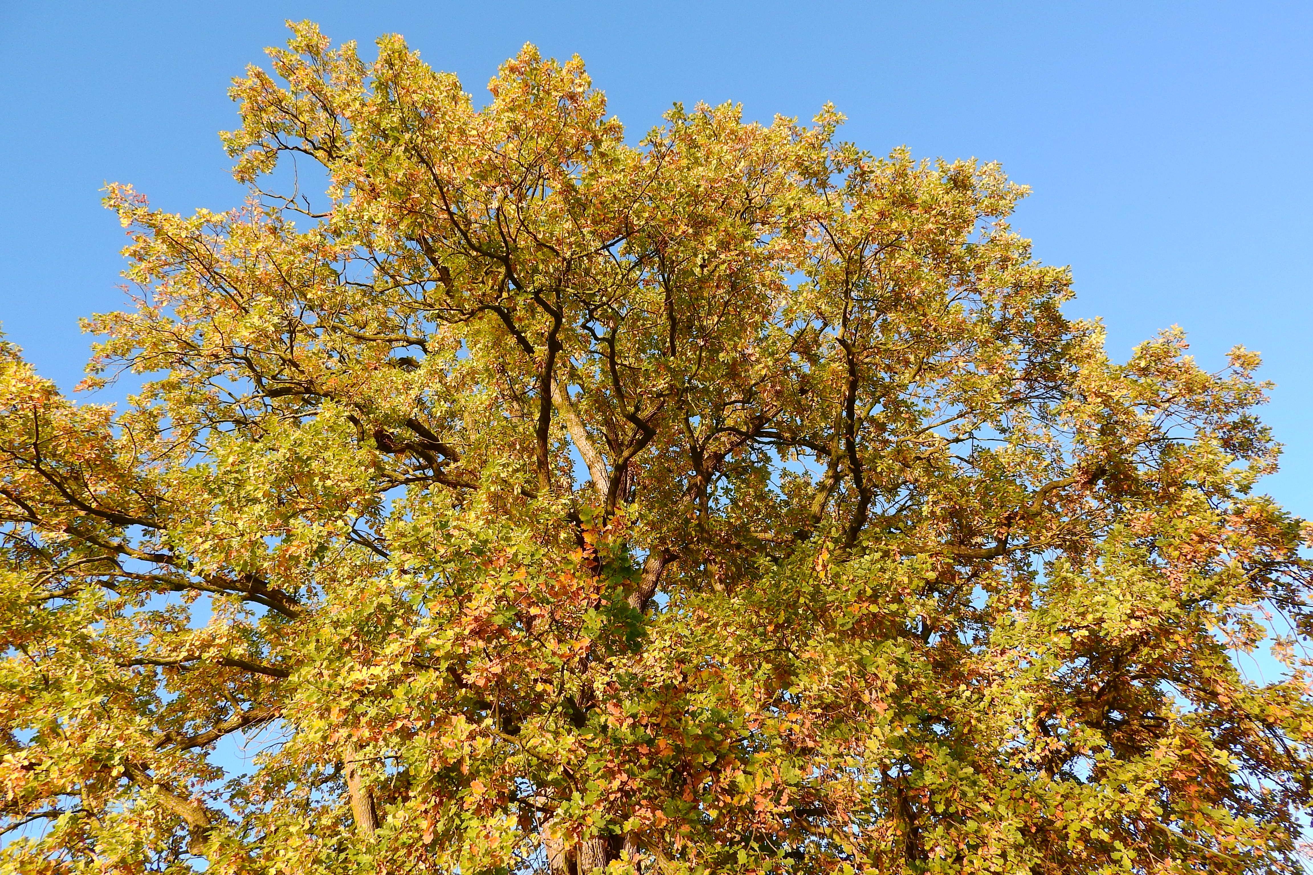 Free Images Branch Leaf Flower Season Maple Tree Deciduous