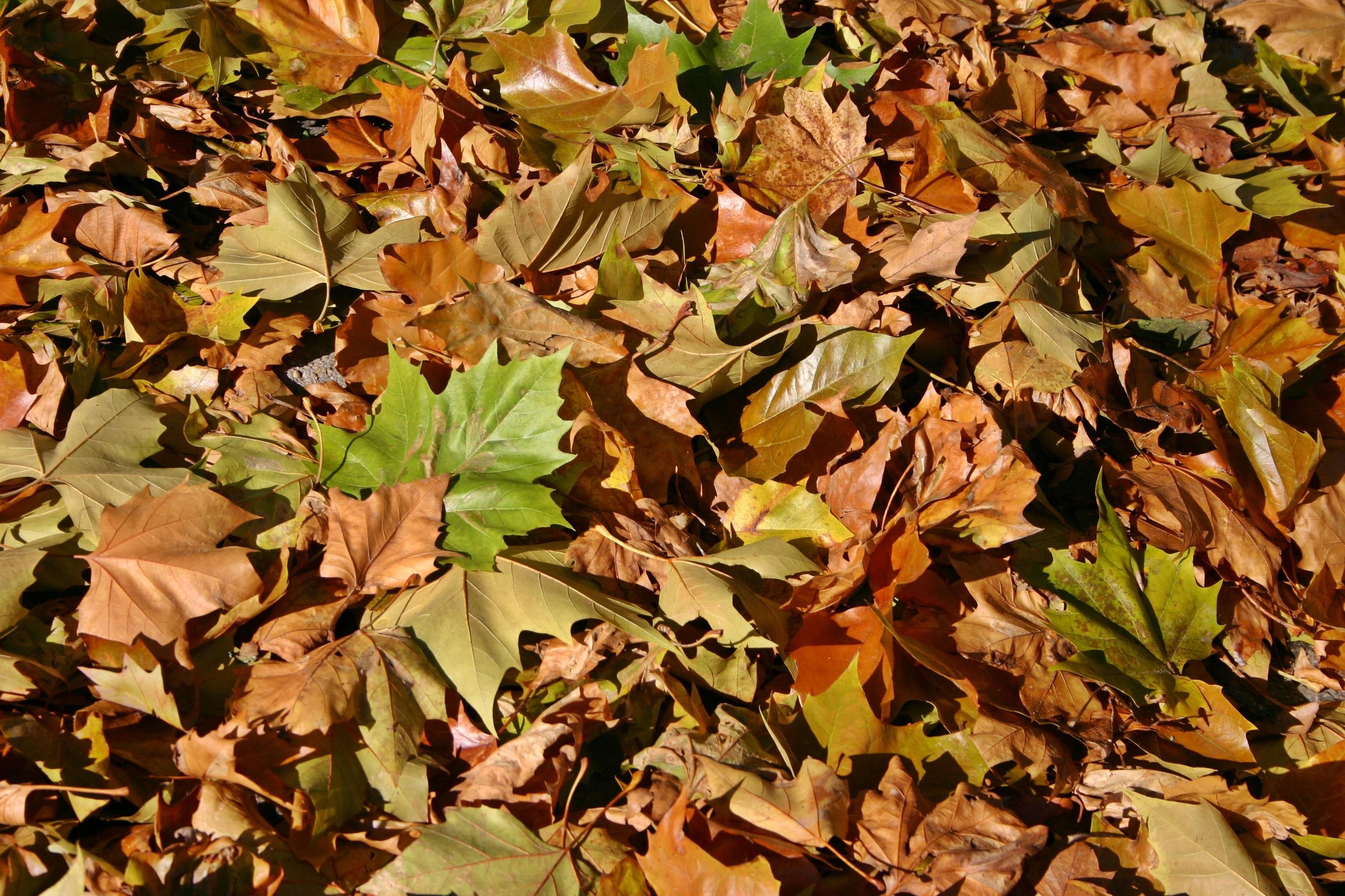 Fotoğraf Ağaç şube çiçek Kuru Kahverengi Botanik Sezon