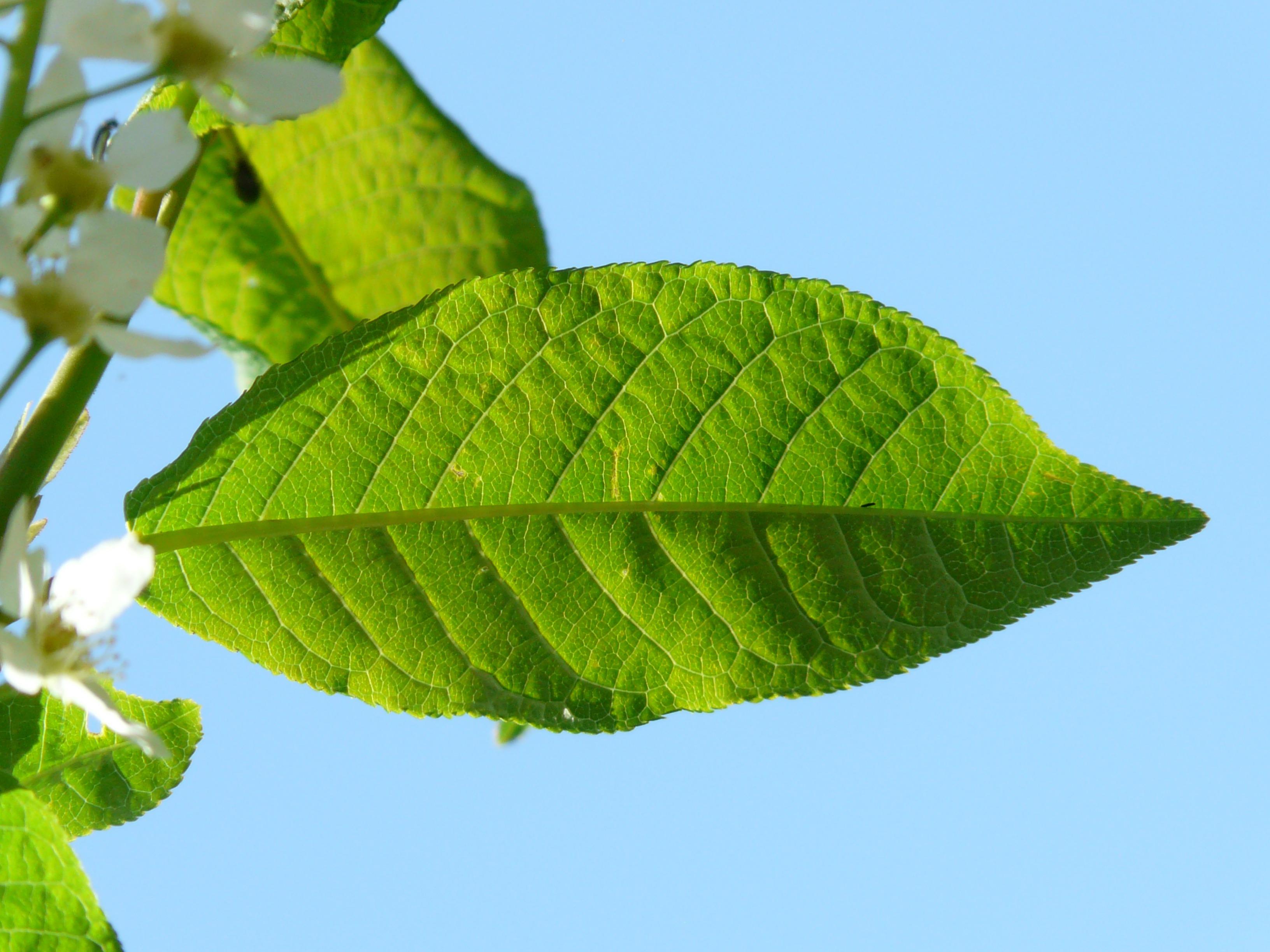 Images gratuites arbre branche feuille fleur aliments images gratuites arbre branche feuille fleur aliments printemps vert herbe produire botanique flore feuilles arbuste plante fleurs altavistaventures Image collections