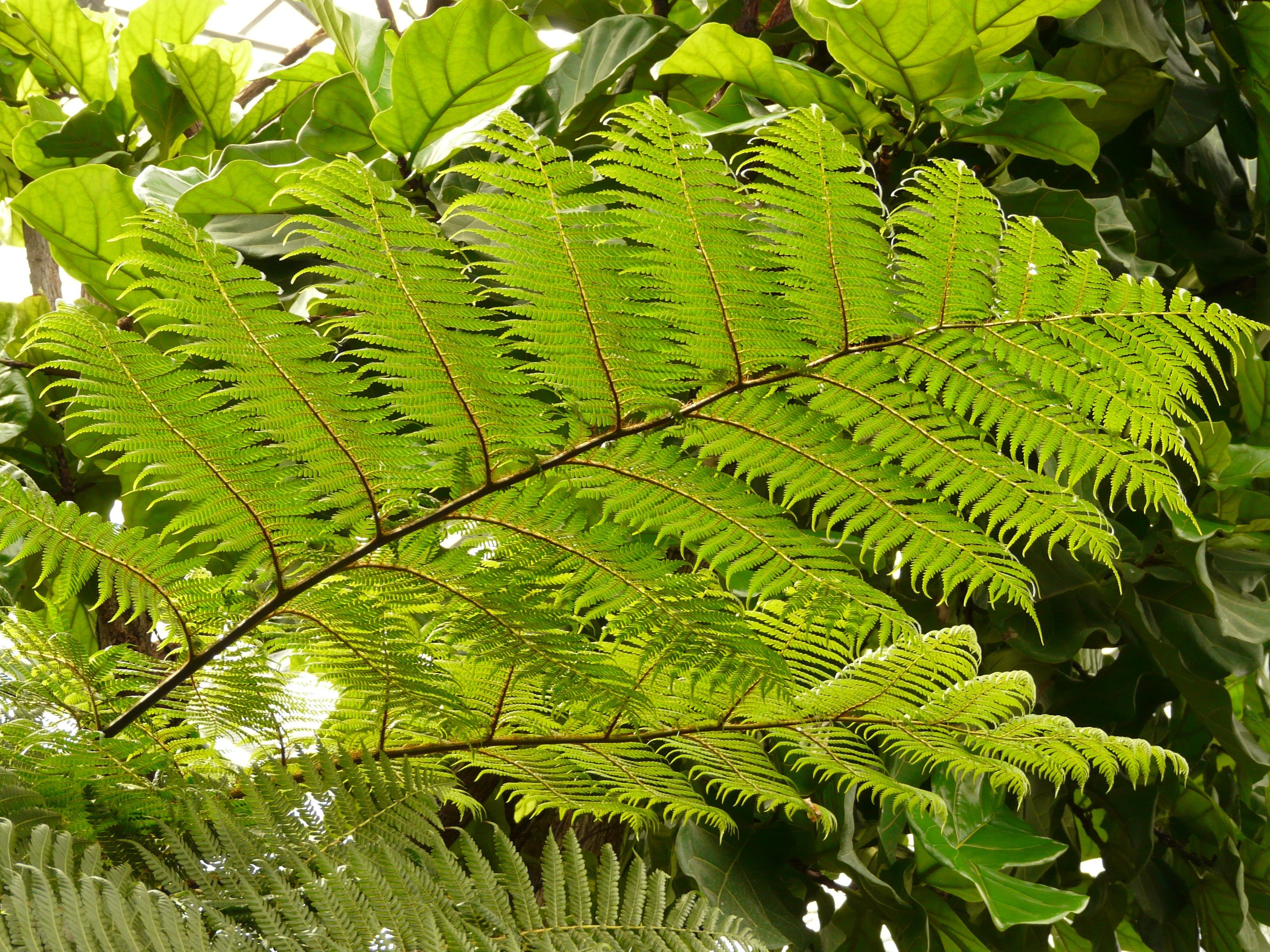Images gratuites arbre branche plante feuille fleur for Plante jungle