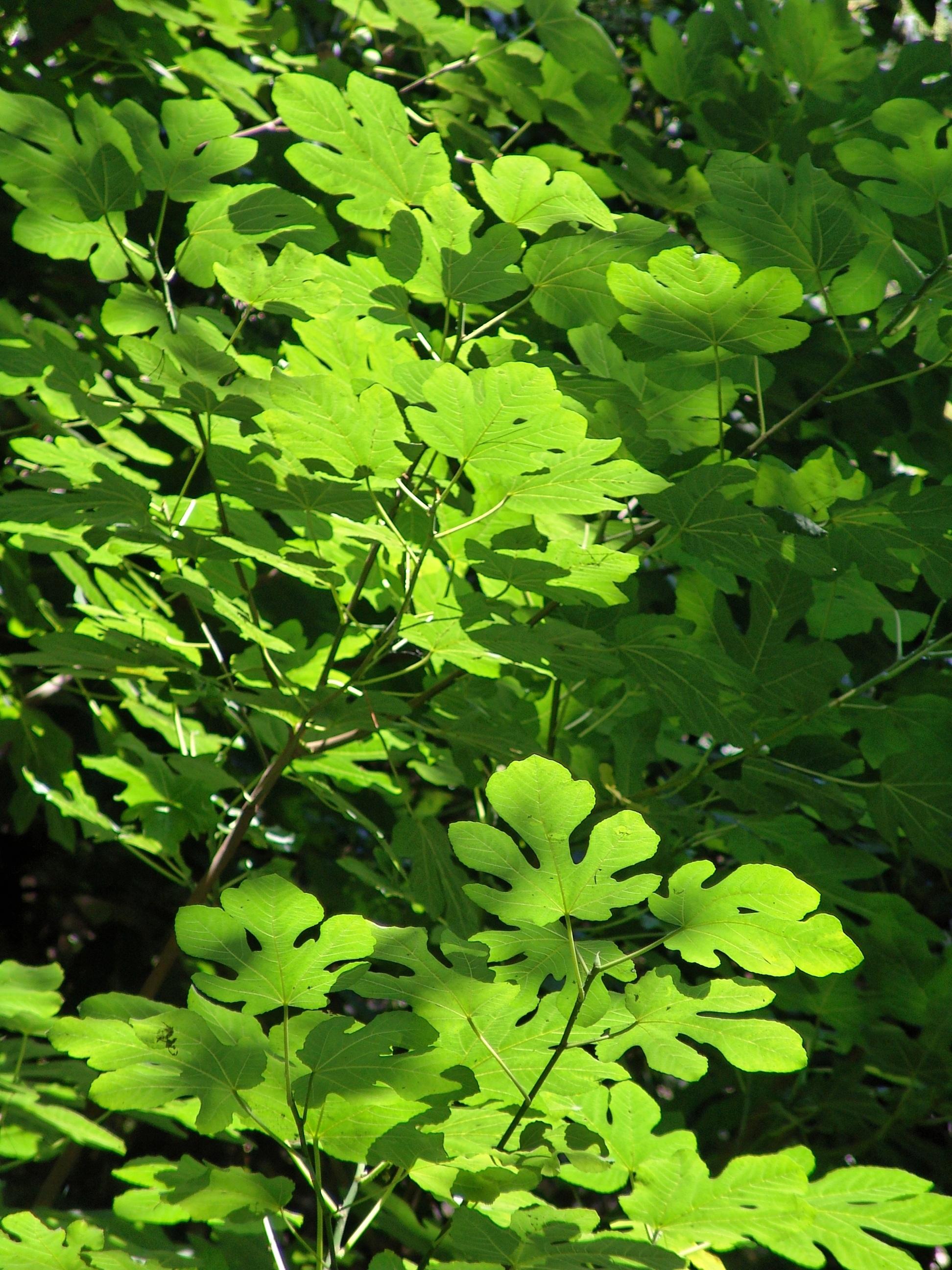 hình ảnh : cây, chi nhánh, thực vật, Lá, màu xanh lá, Sản xuất, Thực vật học, Cây xanh, Cây bụi, Rụng lá, Hệ sinh thái, đối tượng, thực vật có hoa, ...