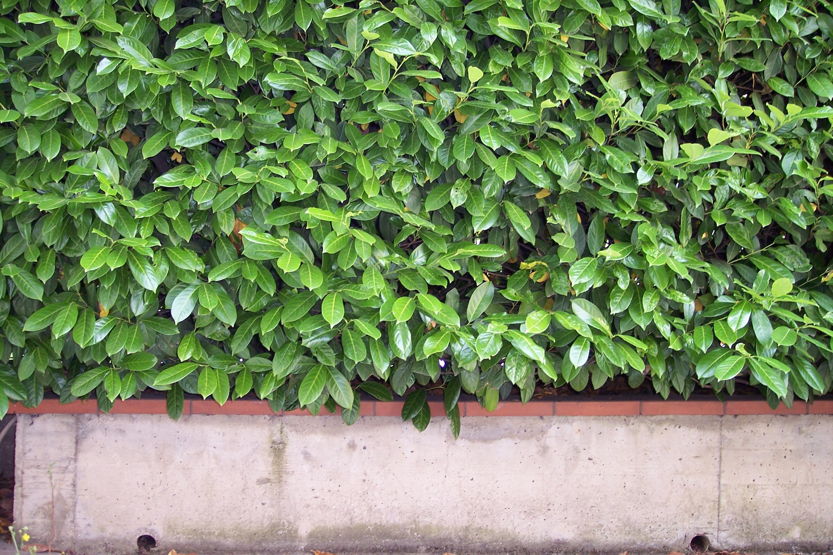 Kostenlose foto Baum Ast Blatt Blume Grün produzieren Efeu