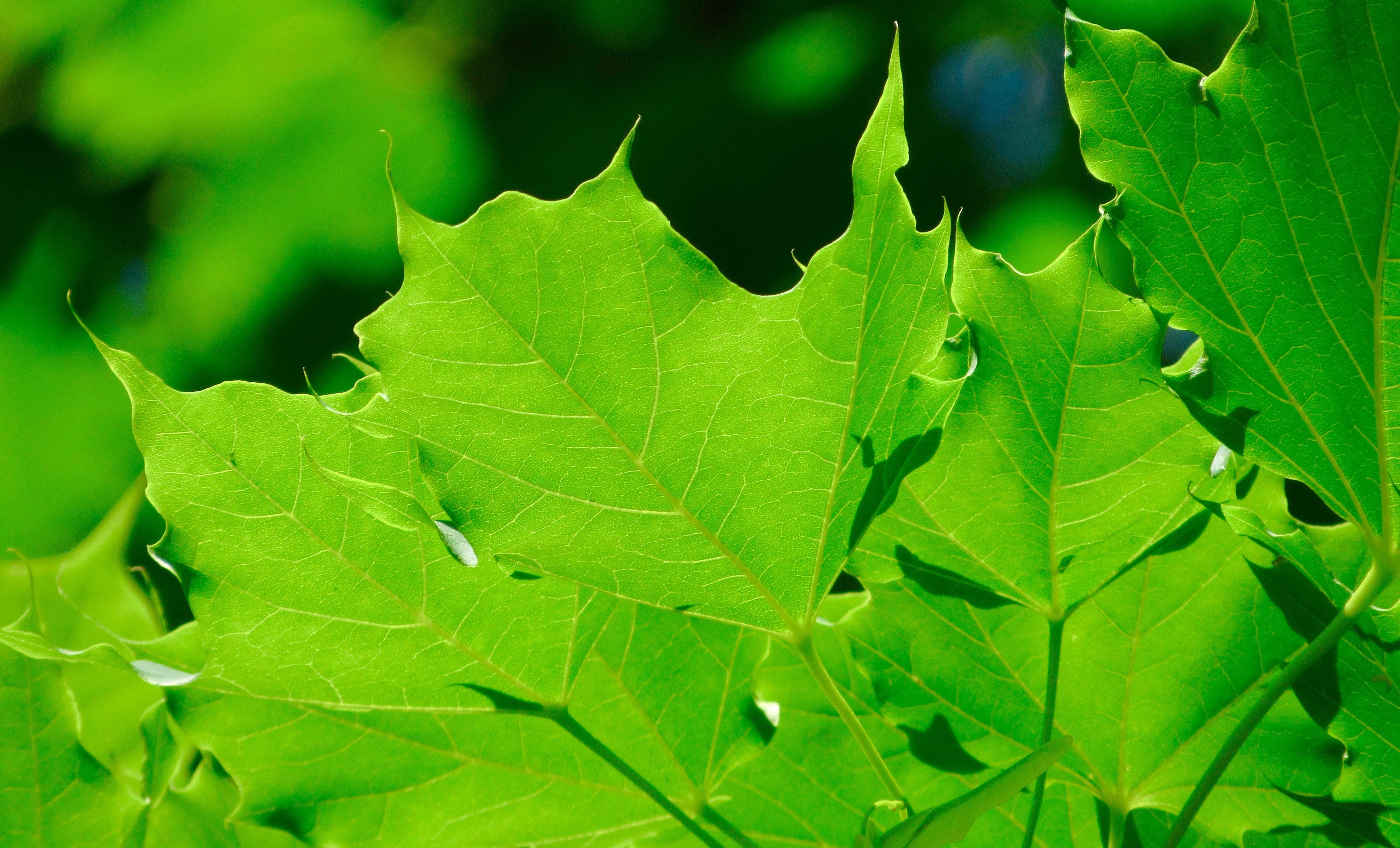 тормозные диски, картинка фото дерева и листьев бактерий виде