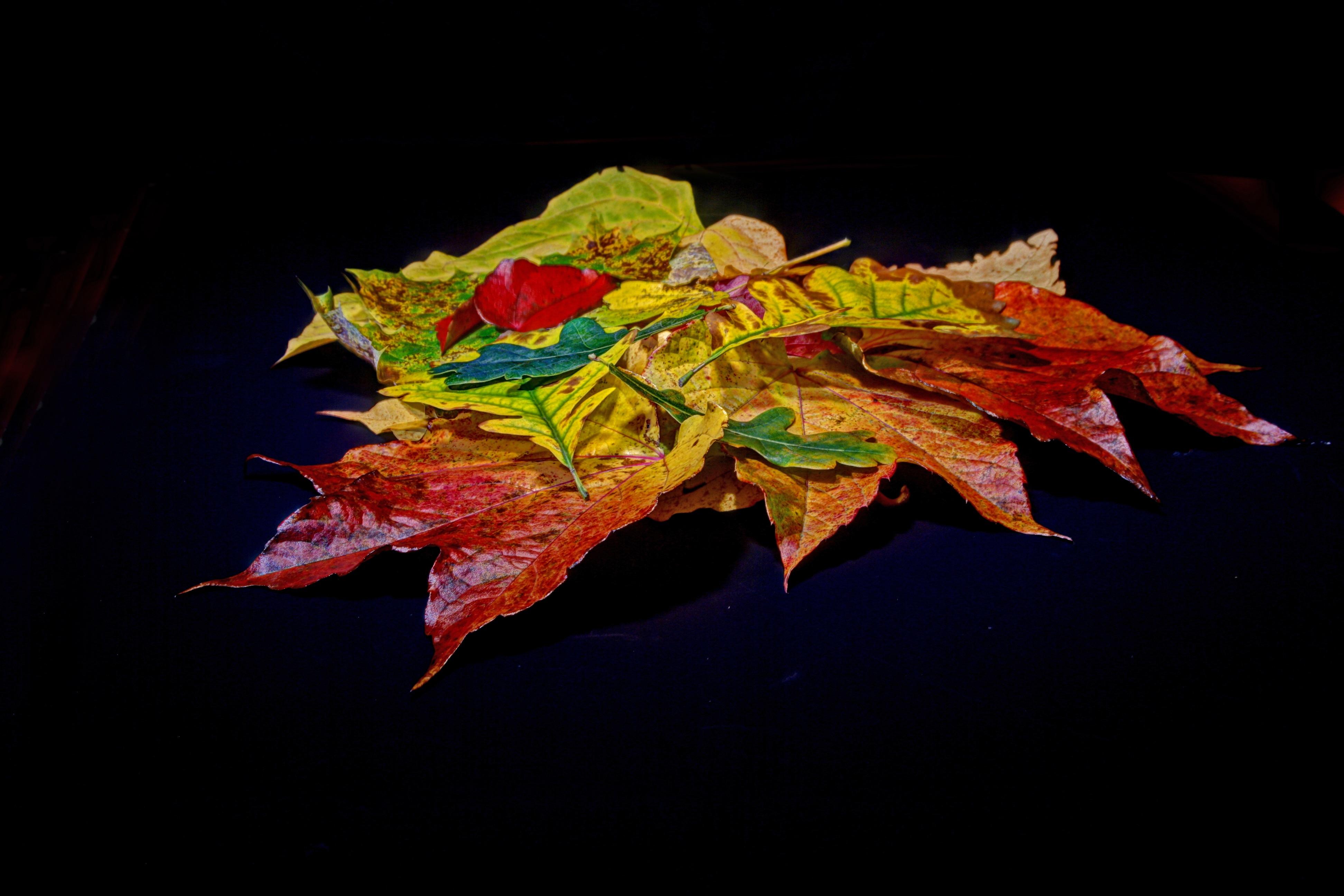 Kostenlose foto : Baum, Ast, Blatt, Blume, Grün, rot, Farbe, braun ...