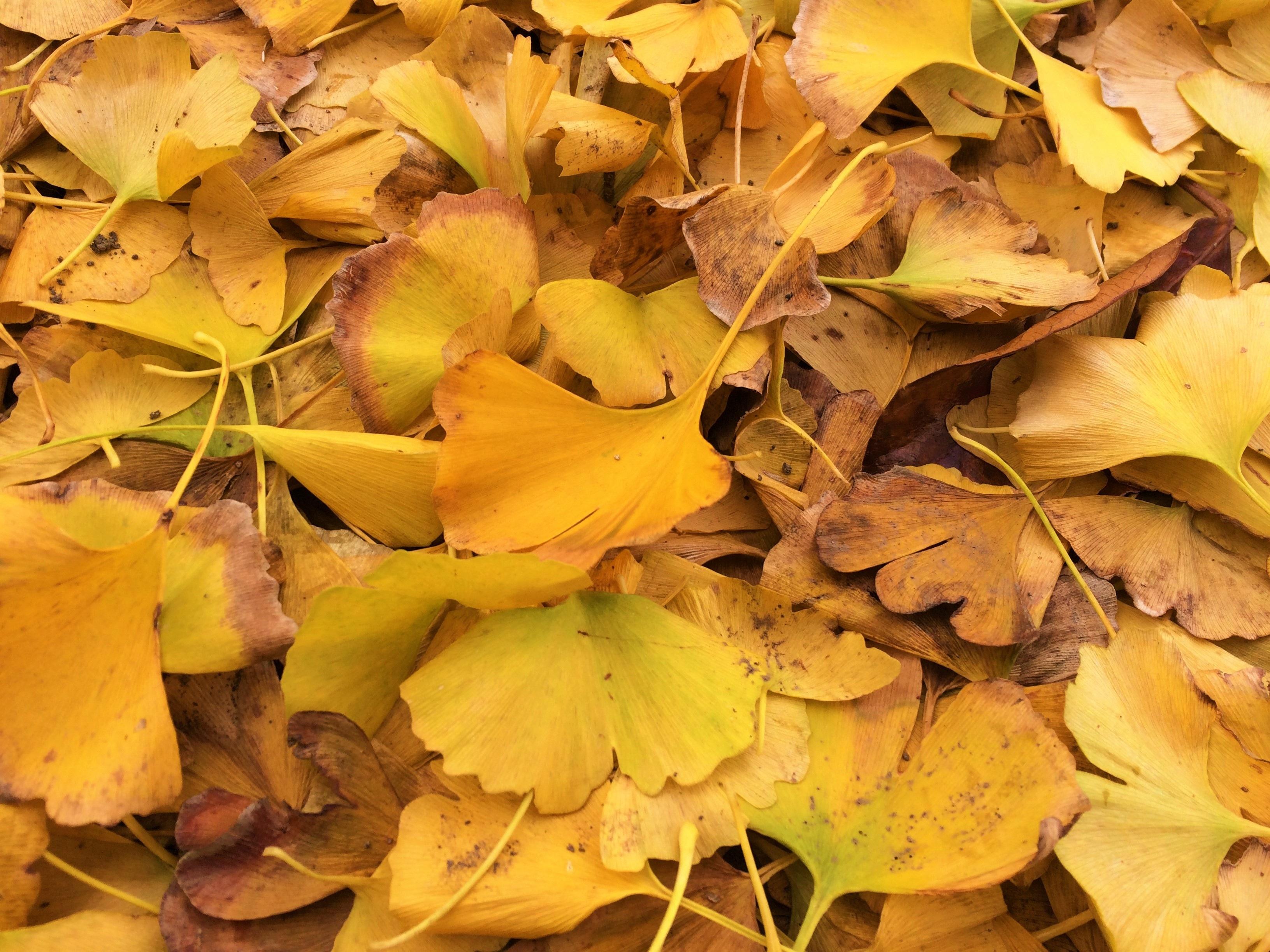 содержательная, учитываются деревья с опавшей листвой картинки смех улыбки