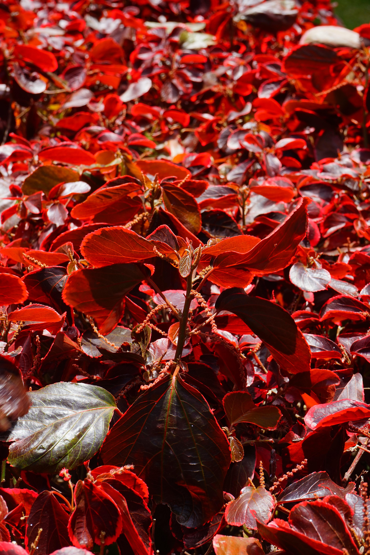 Free Images Tree Branch Flower Petal Bush Color Autumn