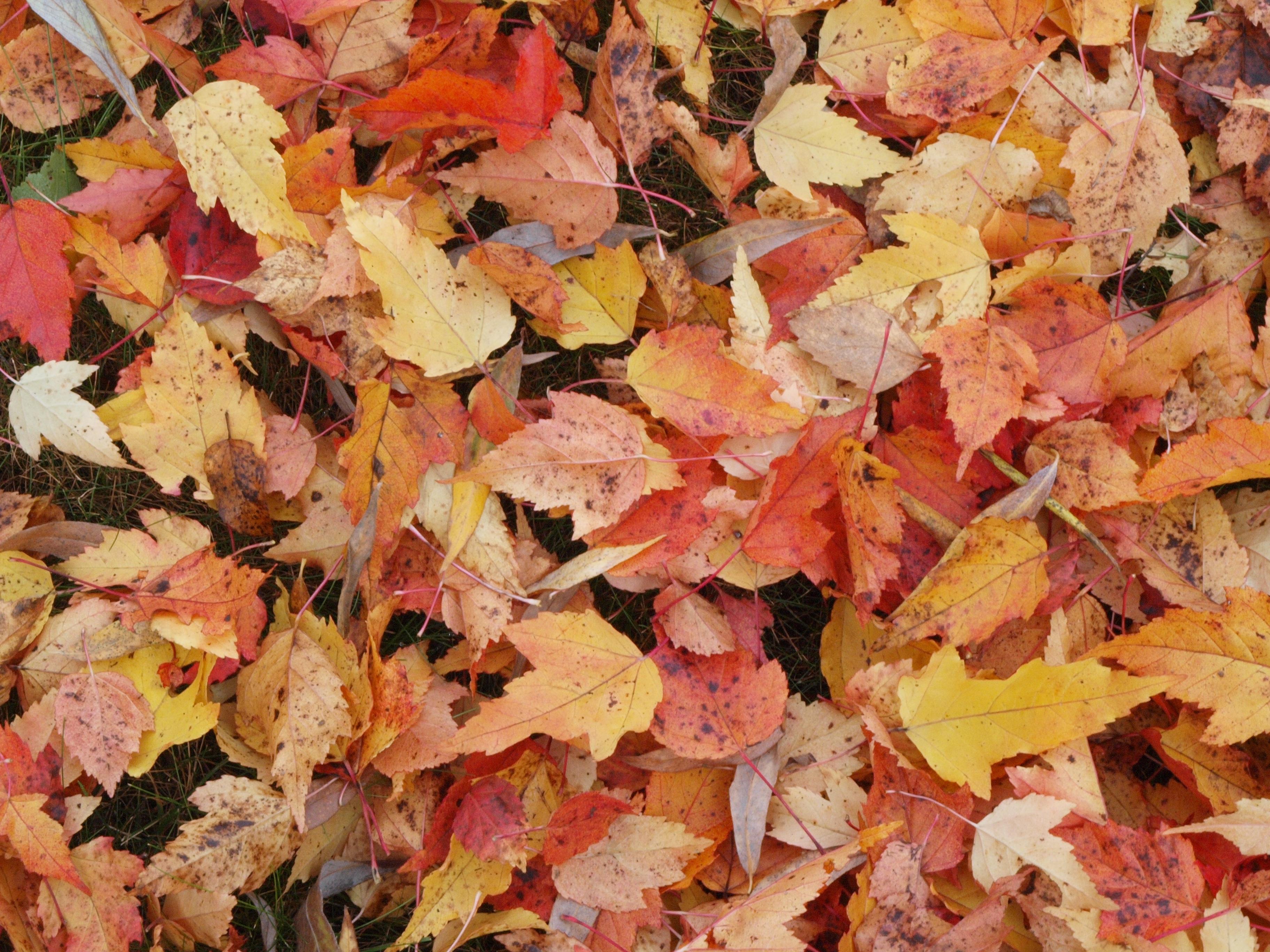 картинки листья опадают листья часто подобные случаи