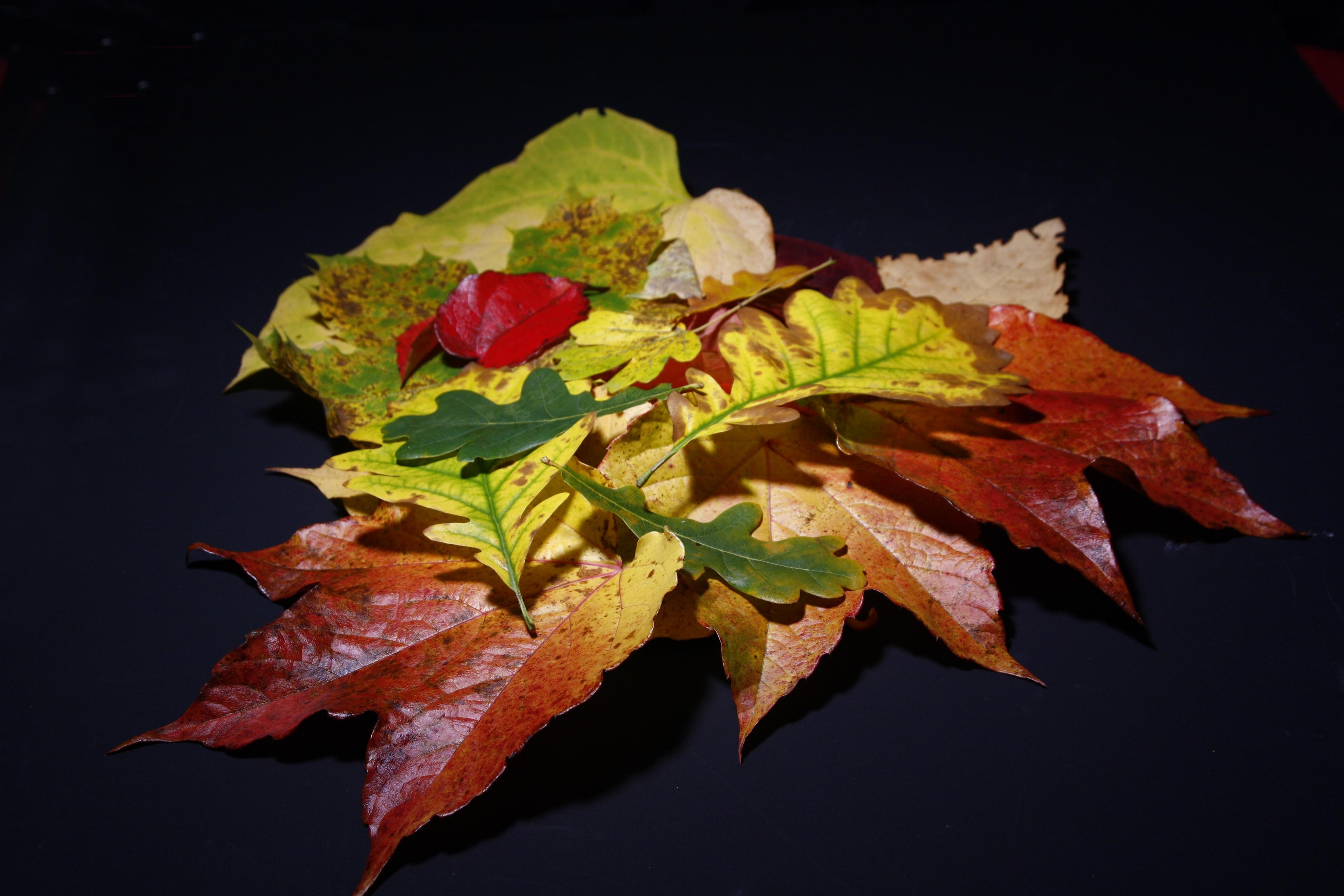 Kostenlose foto : Baum, Ast, Blatt, Blume, Blütenblatt, Grün, rot ...