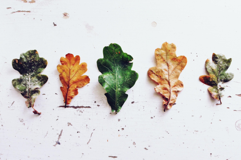 Kostenlose foto : Baum, Ast, Pflanze, Blatt, Blume, Blütenblatt ...