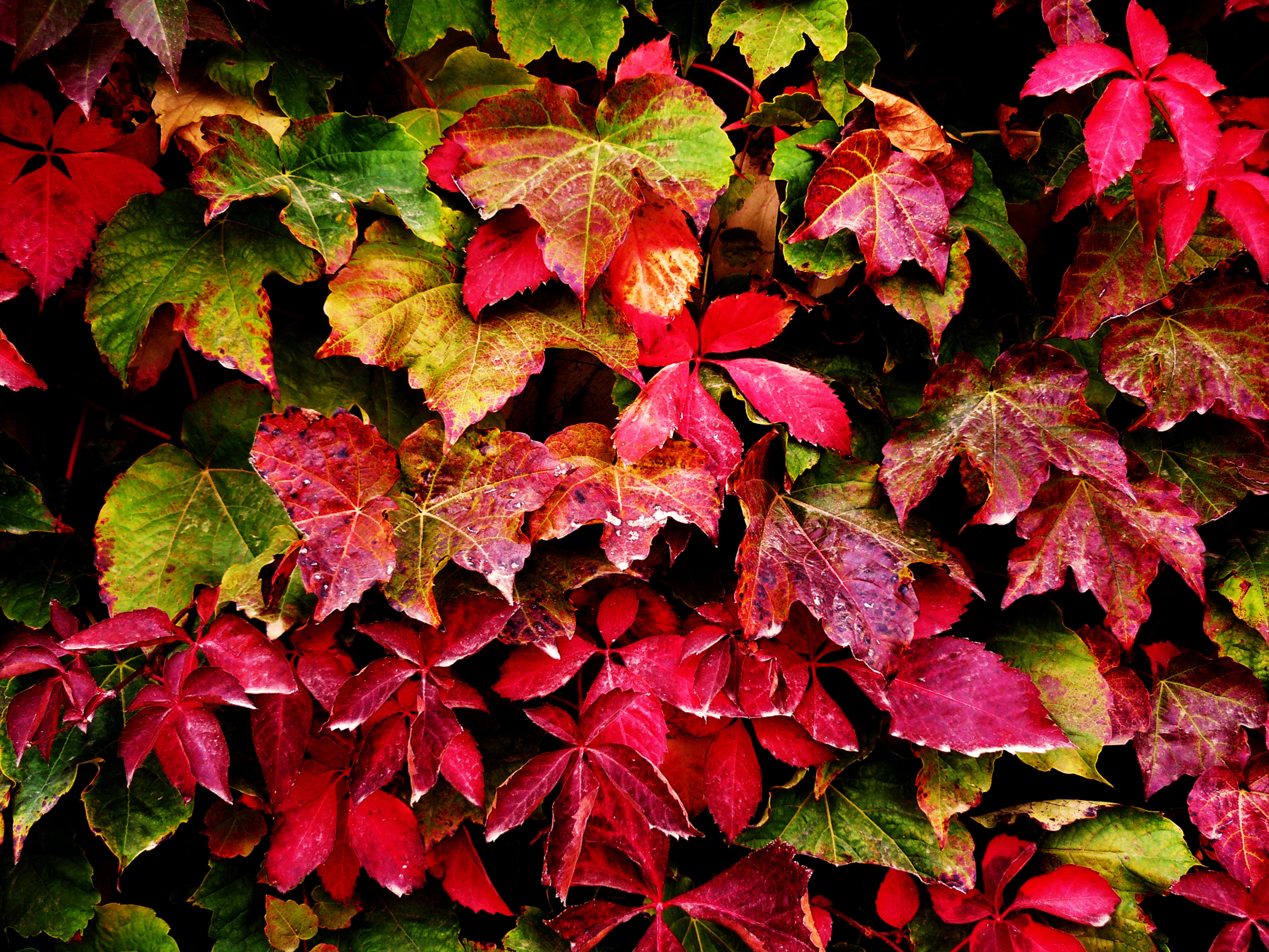 Fotos gratis rama hoja flor p talo rojo bot nica for Arbol rojo jardin
