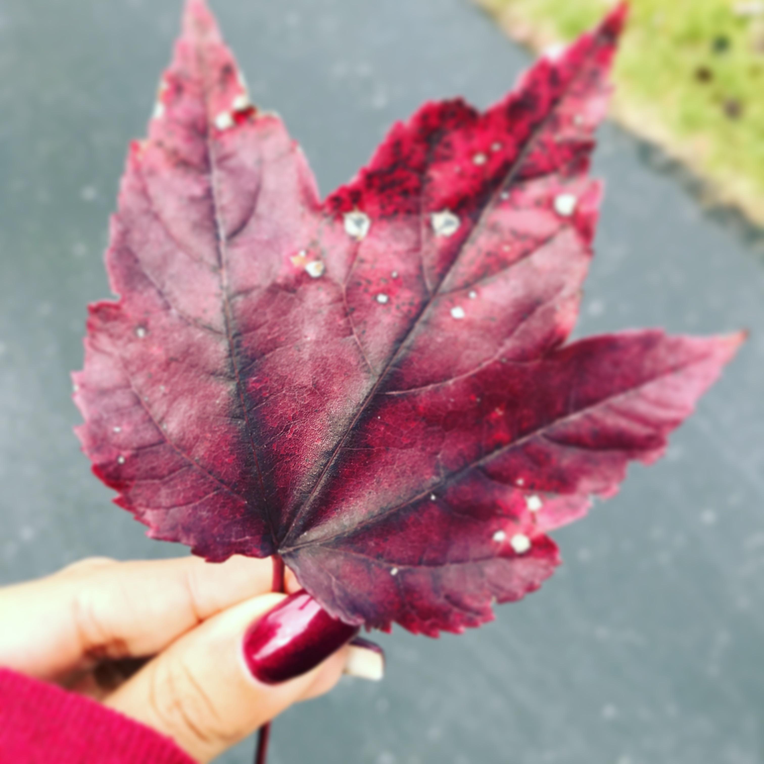 Free Images Branch Flower Petal Red Autumn Pink Season