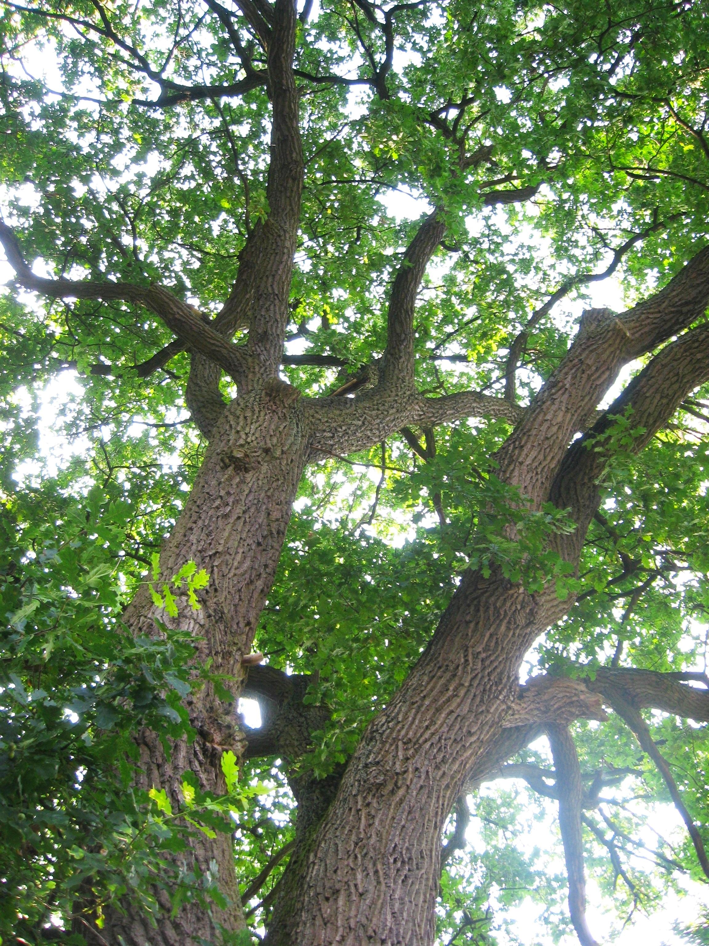 Images gratuites arbre branche feuille fleur tronc - Arbres a feuilles caduques ...