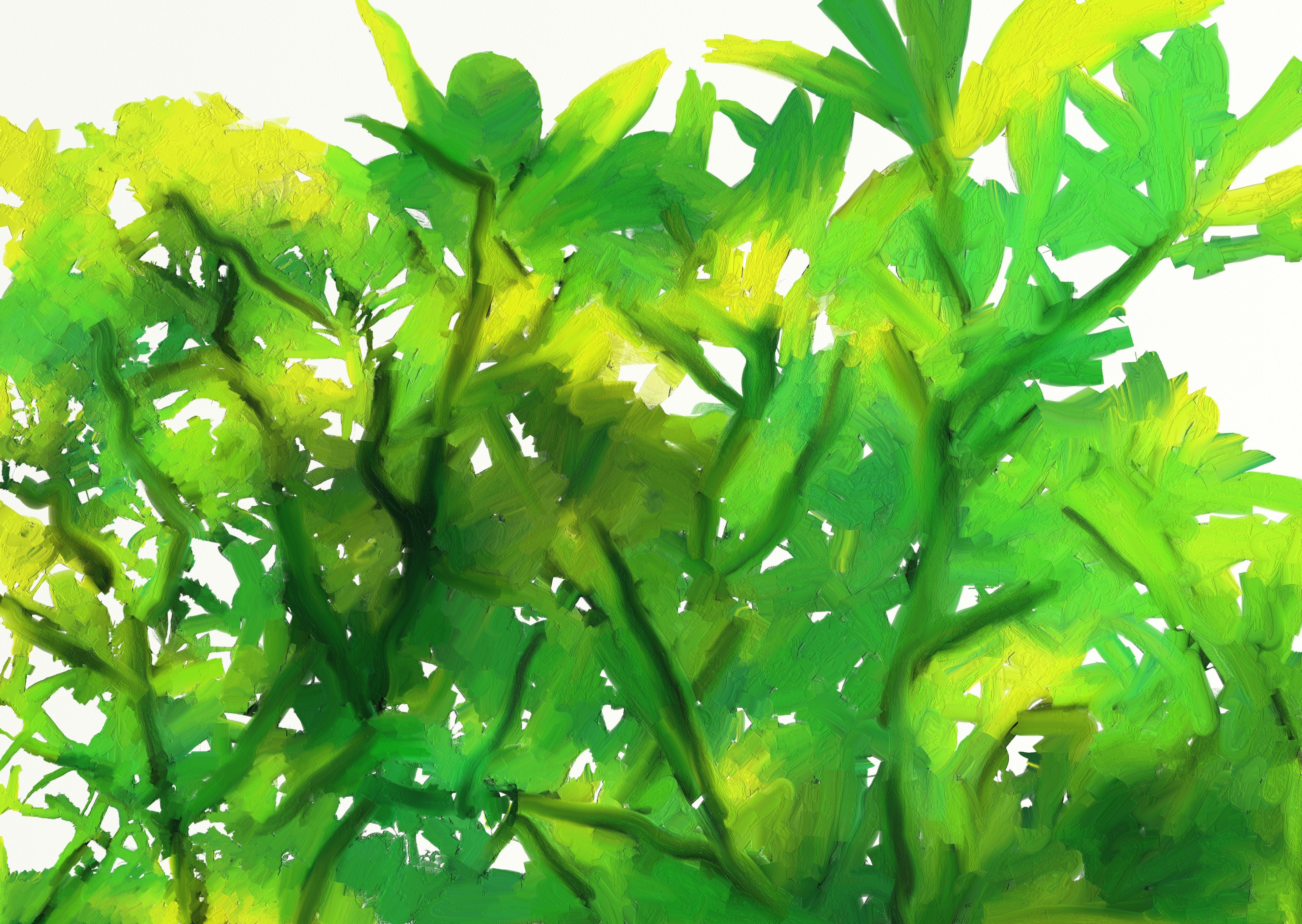 Fotoğraf Ağaç şube Yaprak Gıda üretmek Deniz Yosunu Su