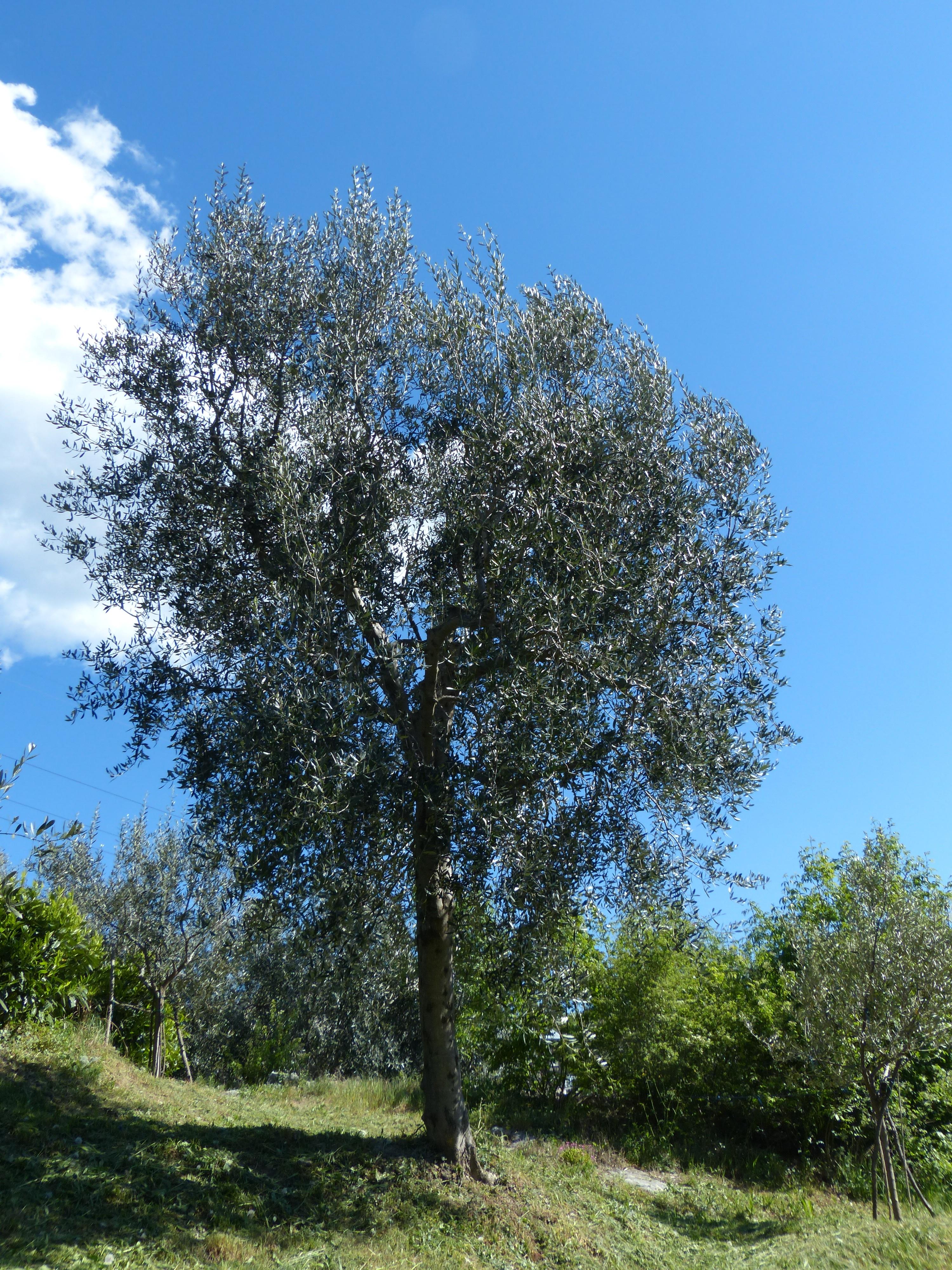 images gratuites arbre branche prairie feuille fleur surgir bouleau flore arbuste. Black Bedroom Furniture Sets. Home Design Ideas