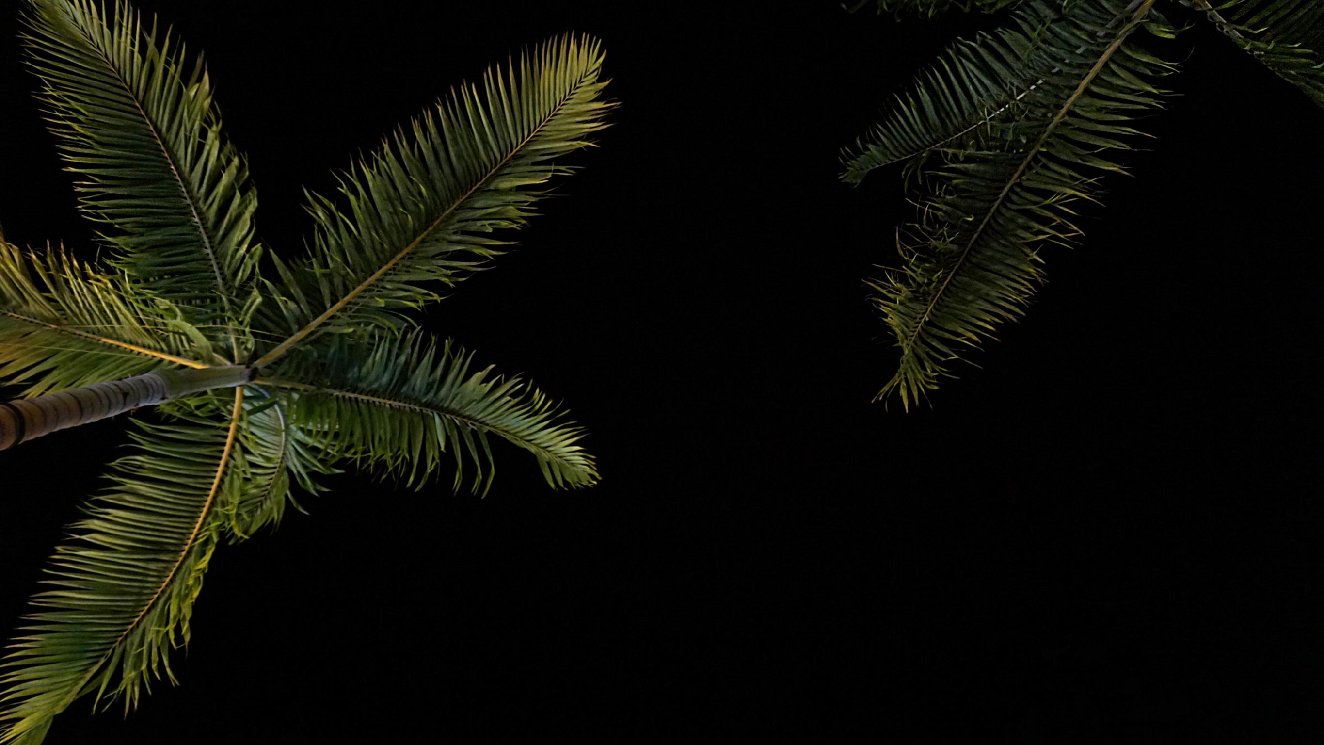 Картинка листья пальмы на черном фоне