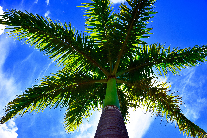 длинные картинки пальмы пумба