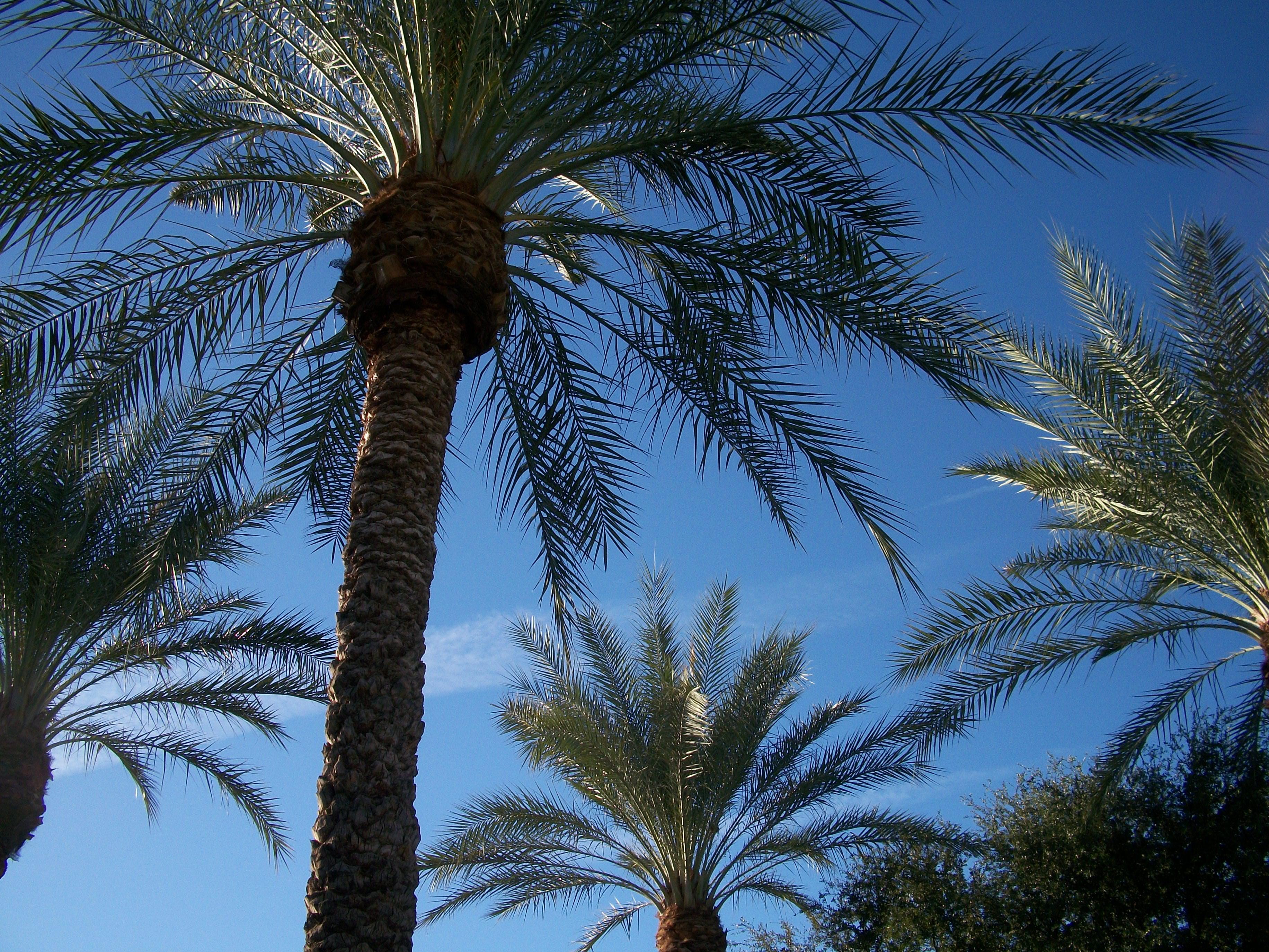 kostenlose foto   baum  ast  himmel  palme  blatt  schwimmbad  produzieren  botanik  tropen