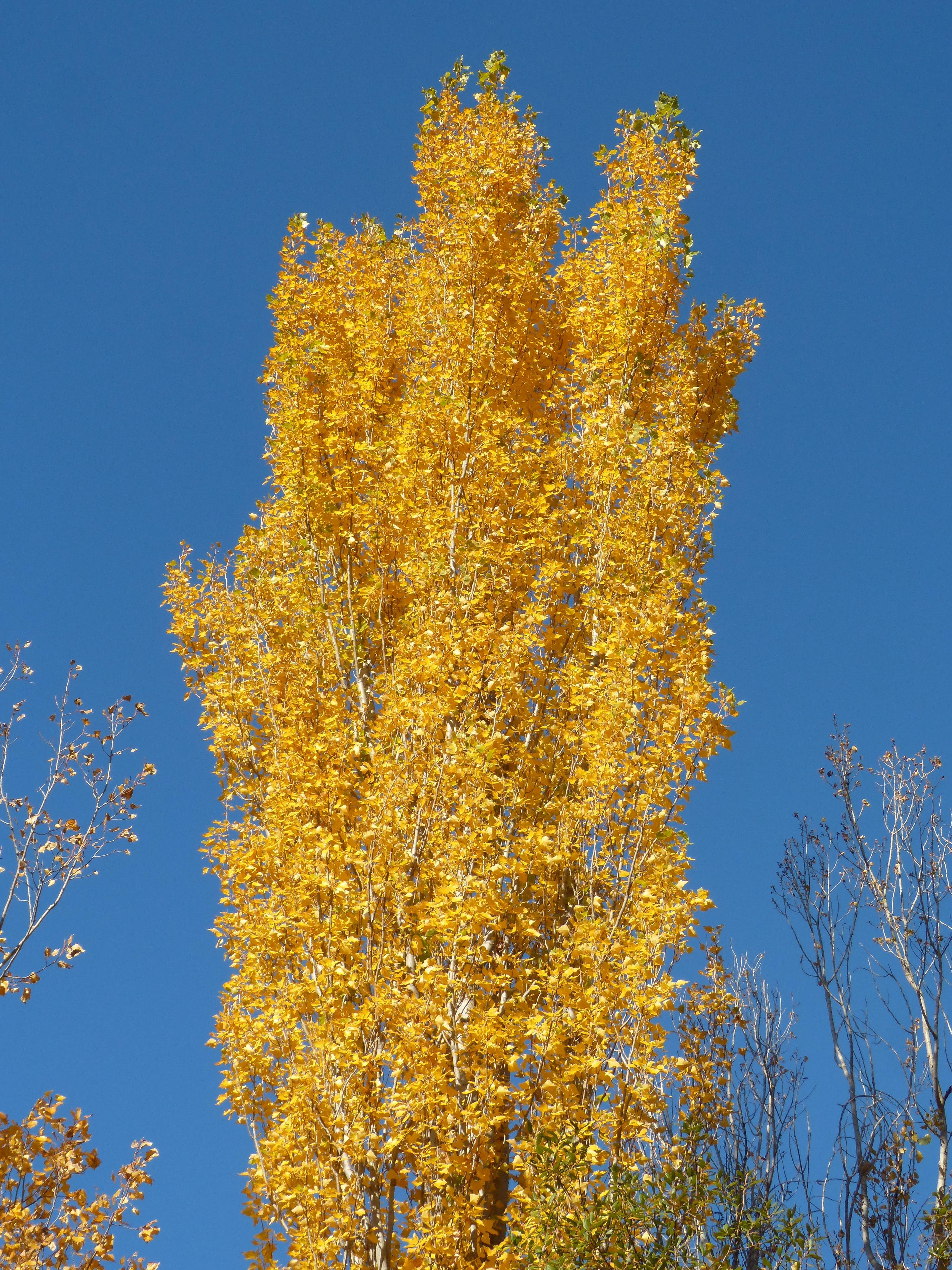 Fotos gratis : árbol, rama, cielo, luz de sol, hoja, flor, abedul ...