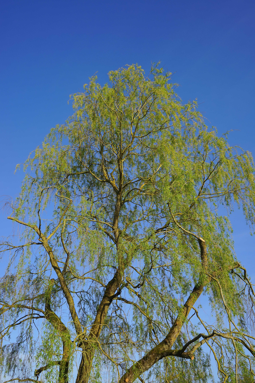 Fotos gratis : árbol, rama, cielo, luz de sol, hoja, flor, verde ...