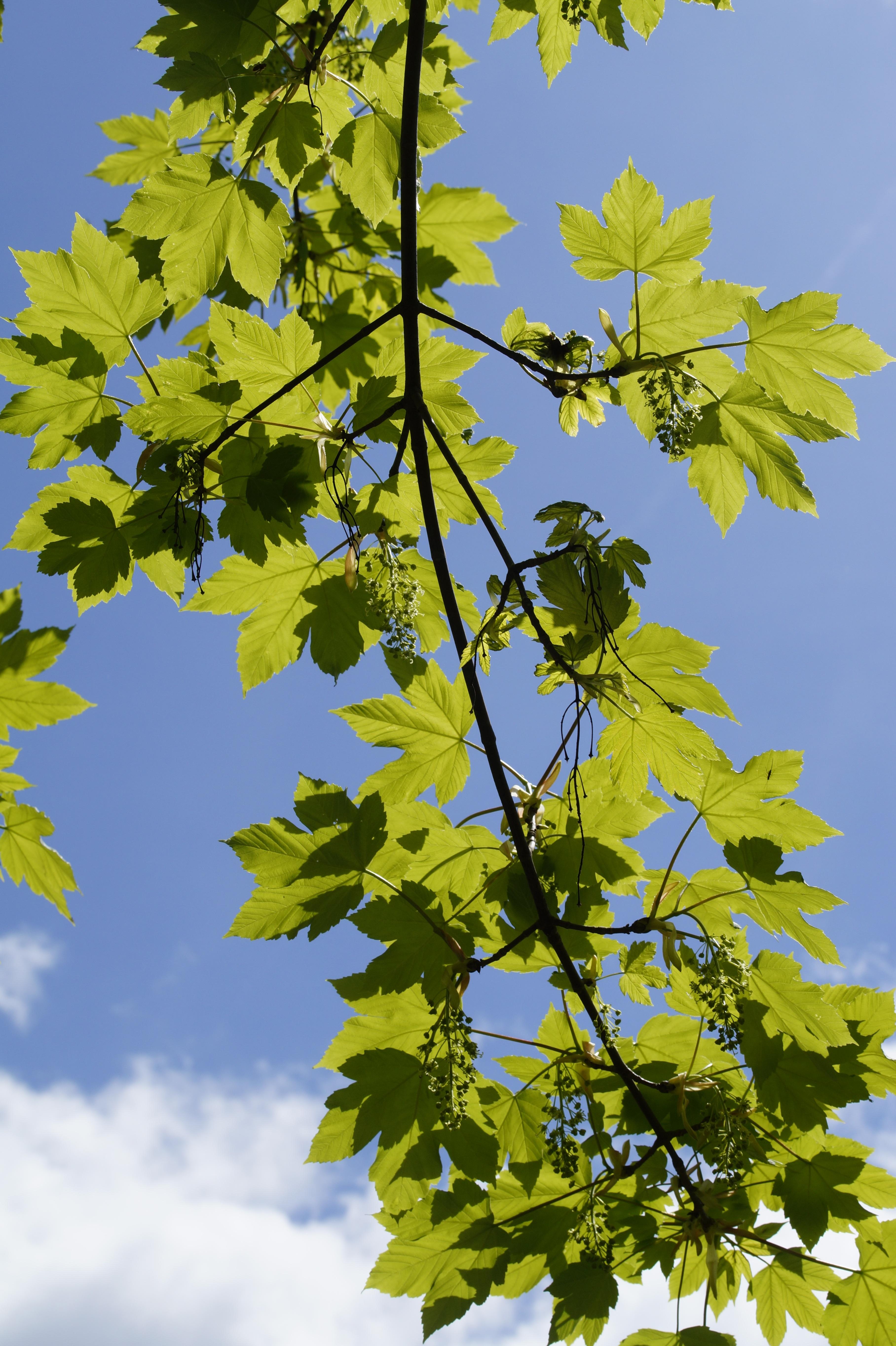 images gratuites arbre branche ciel lumi re du soleil feuille fleur printemps produire. Black Bedroom Furniture Sets. Home Design Ideas