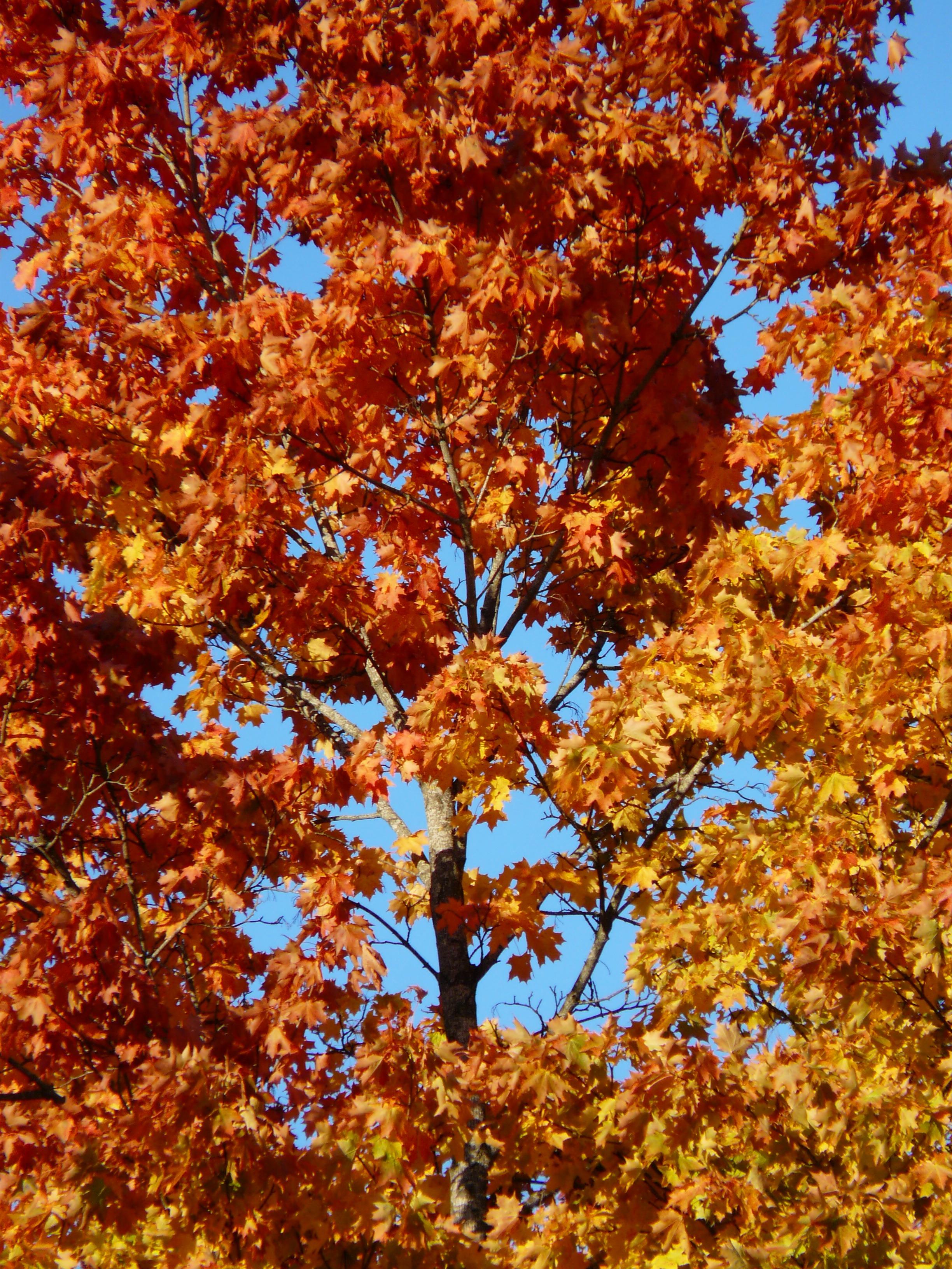 Fotoğraf Ağaç şube Gökyüzü Güneş ışığı Yaprak Altın Sarı