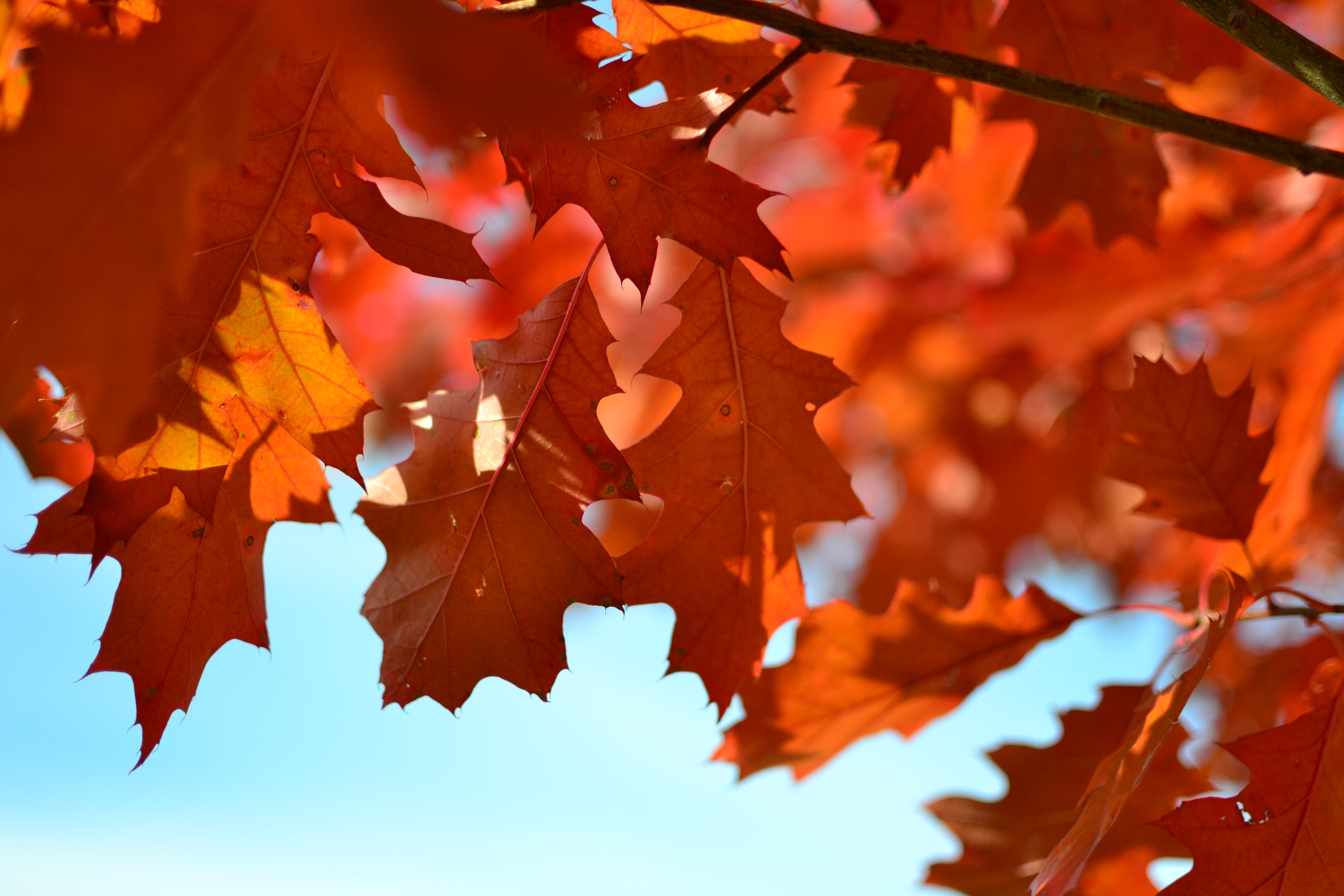 Картинки с листьев, дедушке день