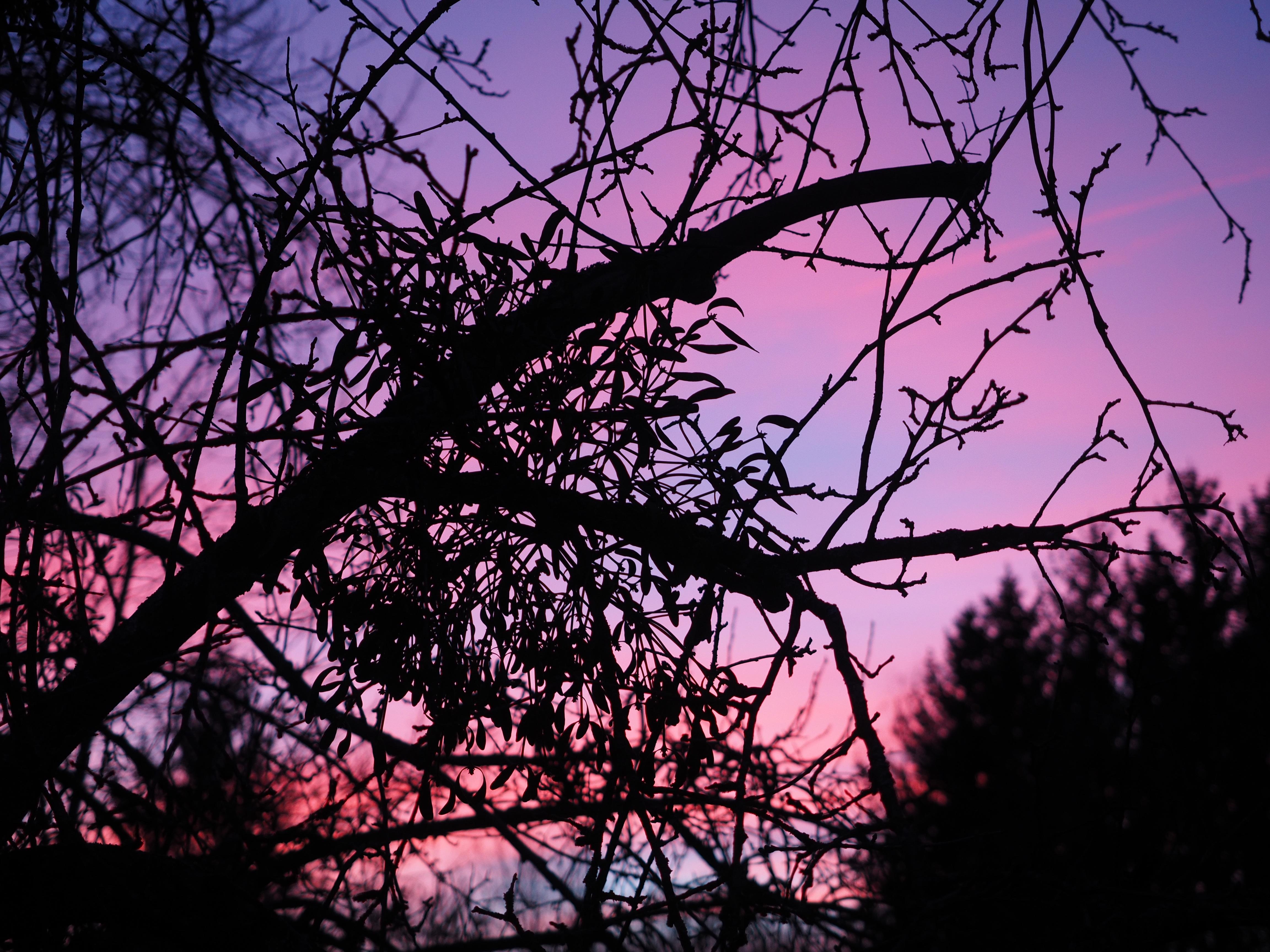 Free Images : Tree, Branch, Sunrise, Sunset, Sunlight