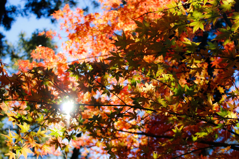 деревья листва осень солнце  № 3191807  скачать