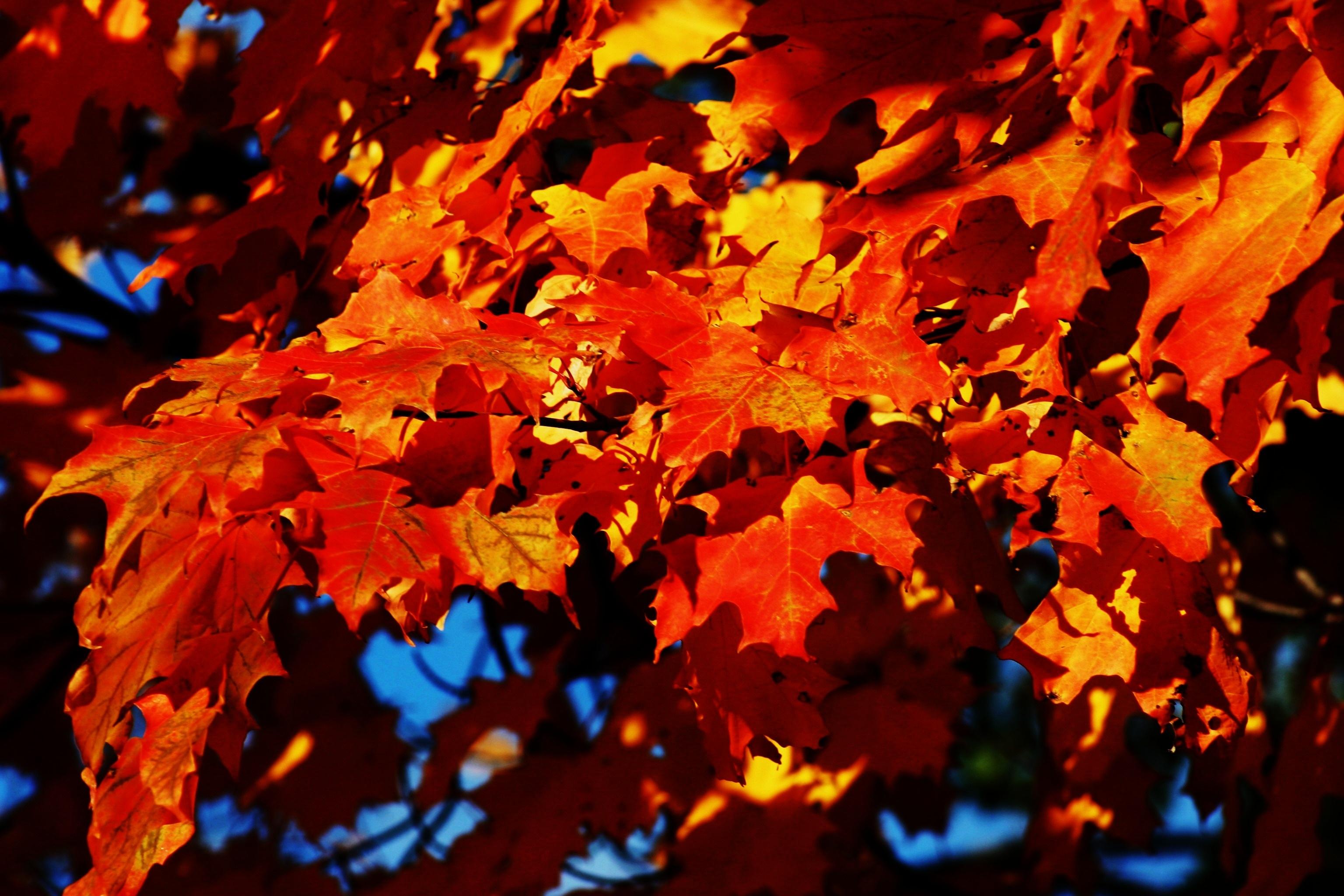 руки осень картинки кленовые листья картинки также завитки очень