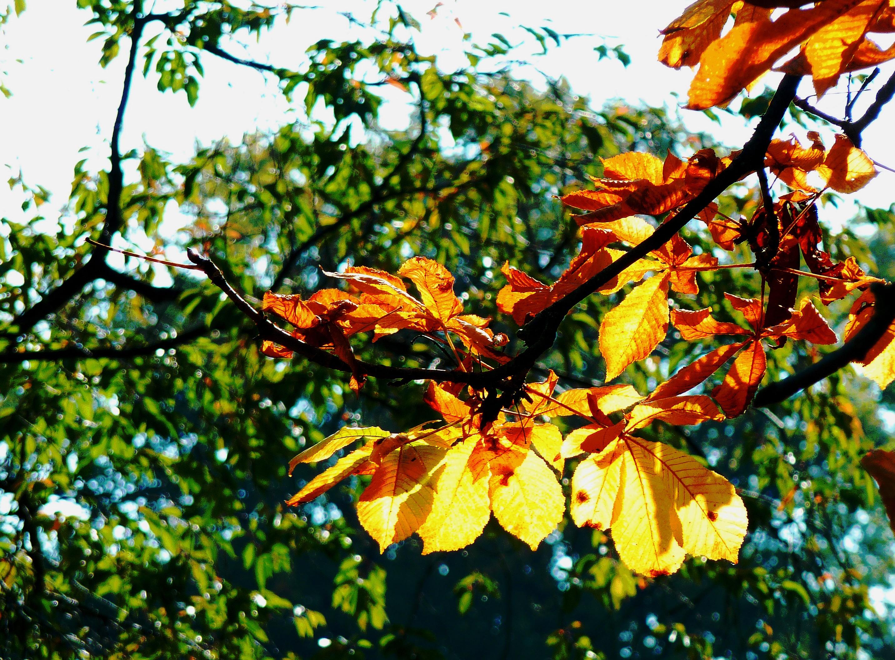 Fotoğraf Ağaç şube Güneş ışığı Yaprak çiçek Kuru Kırmızı