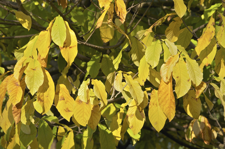 Images gratuites arbre branche lumi re du soleil for Plante 7 feuilles