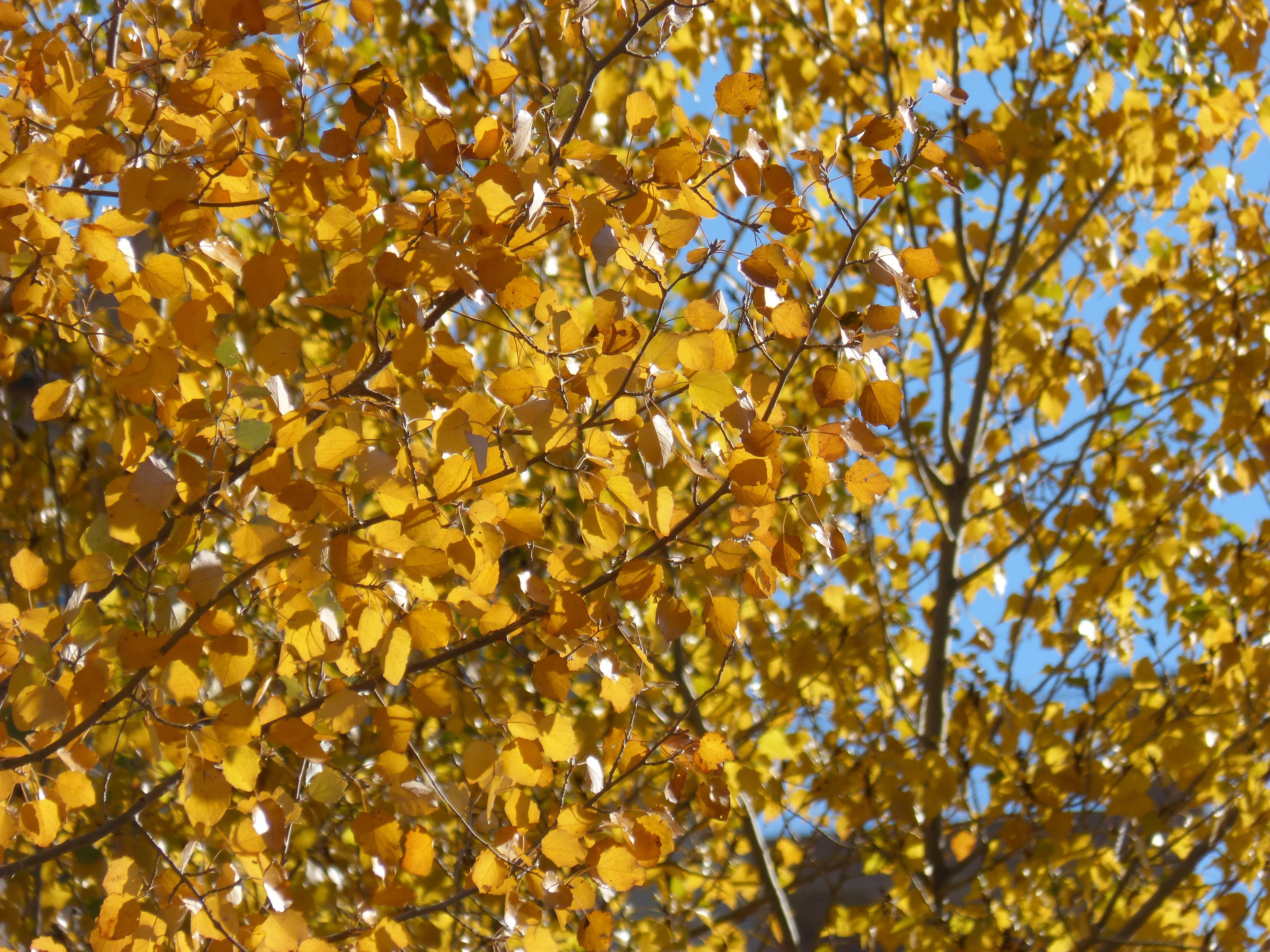 Images Gratuites Arbre Branche Lumiere Du Soleil Feuille Fleur
