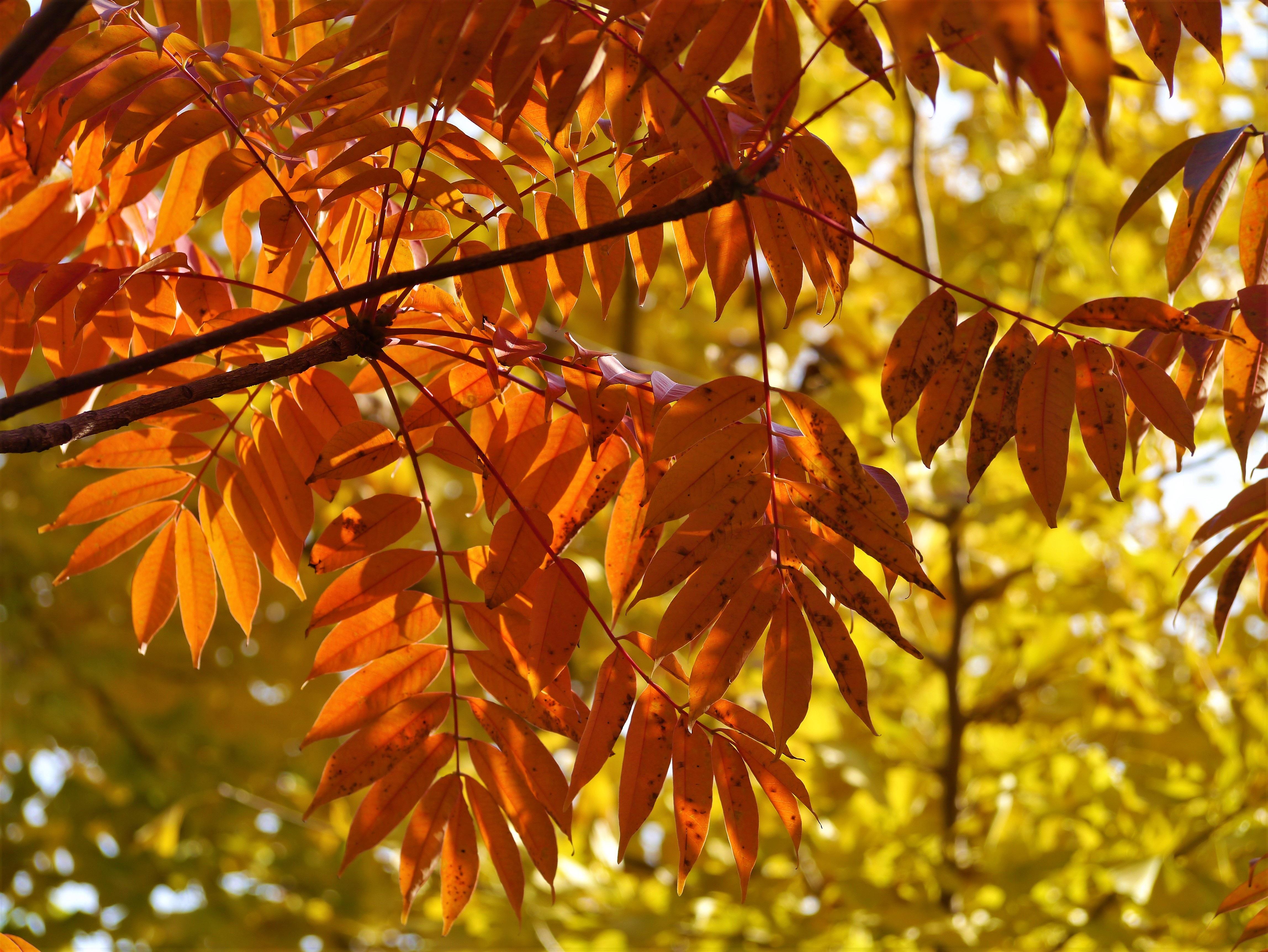 ходить фото осенних листьев деревьев с названиями ещё