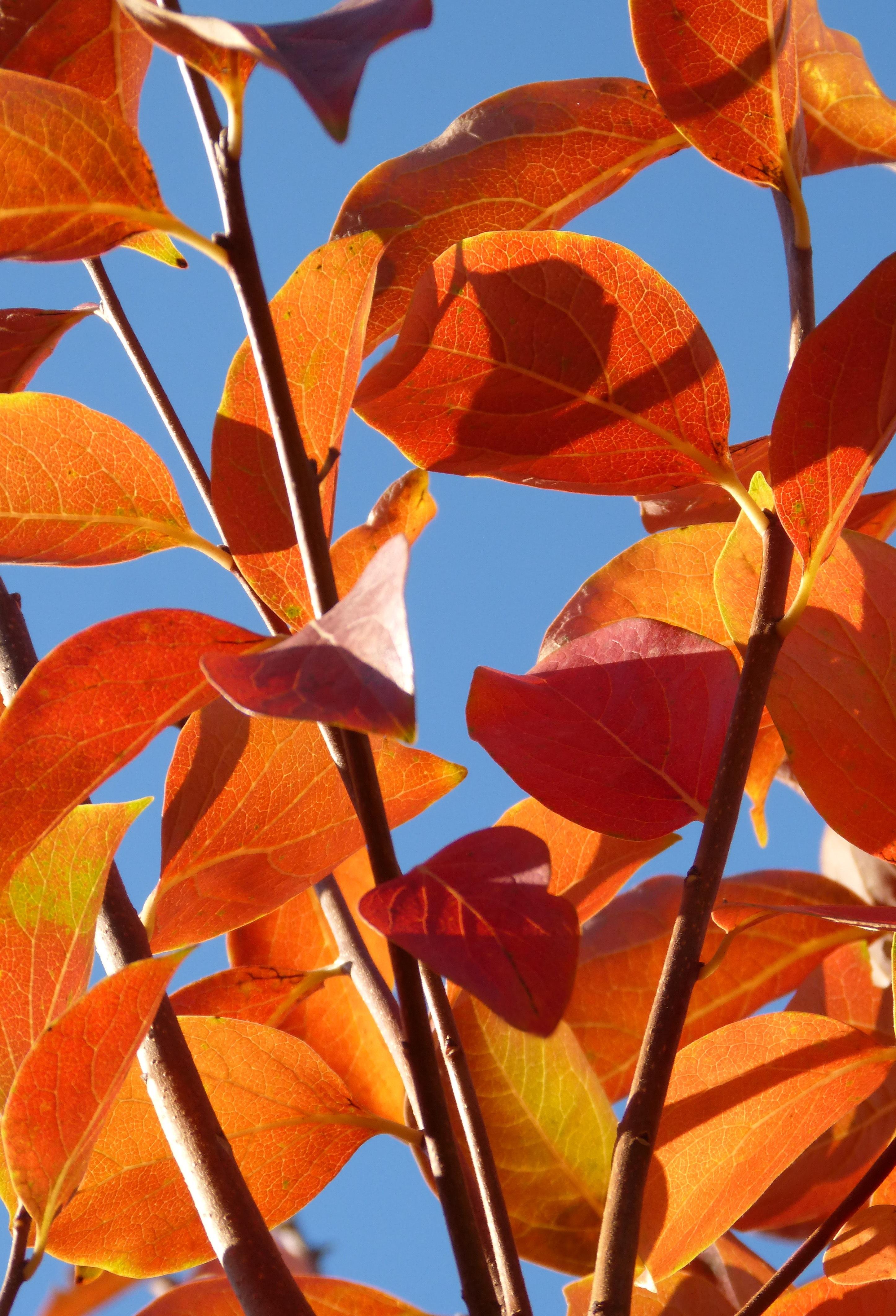 Images Gratuites Arbre Branche Lumiere Du Soleil Fleur Petale