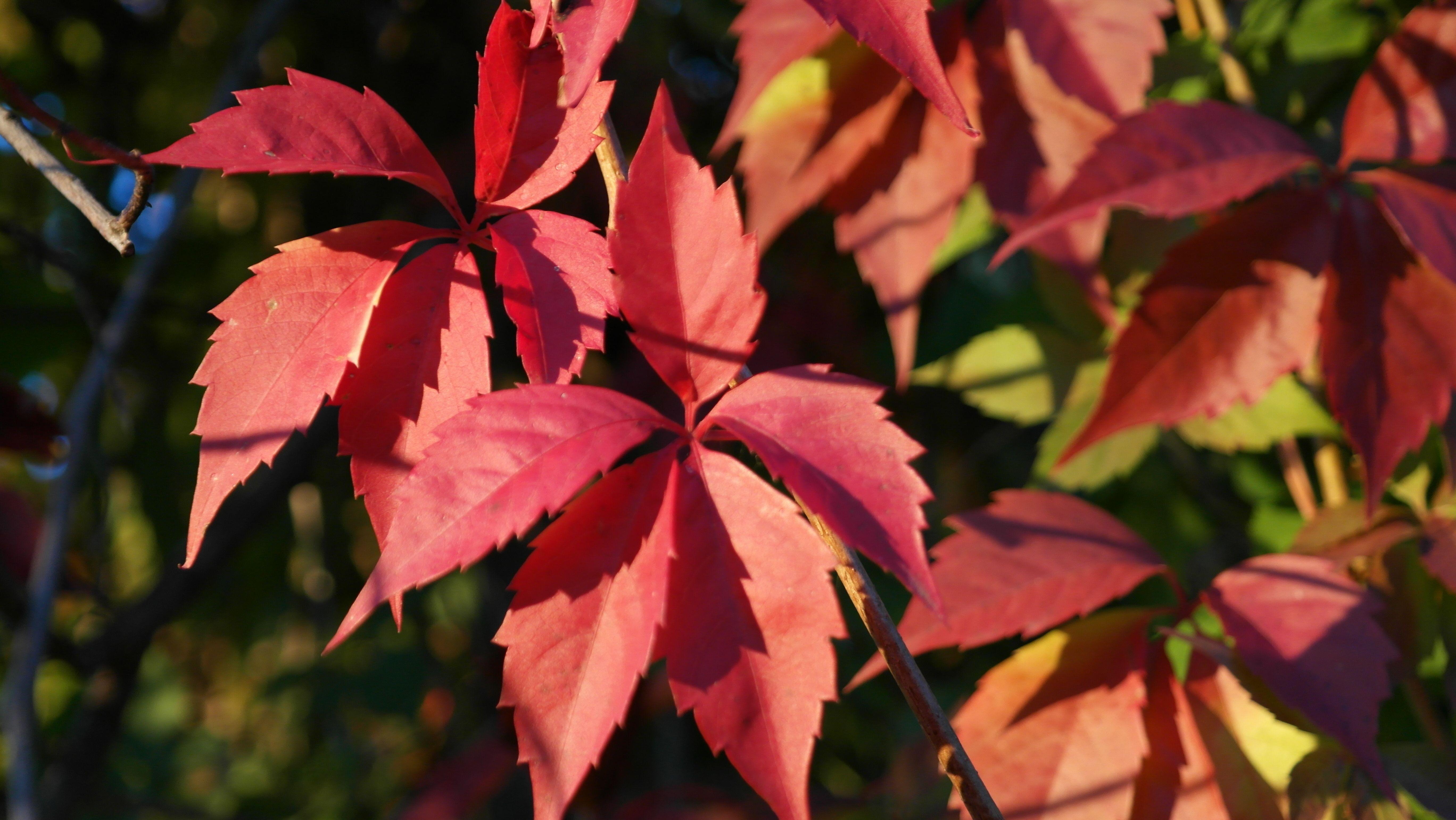 【Şimdiye kadarki en iyi】 Sonbahar Yaprak Boyama