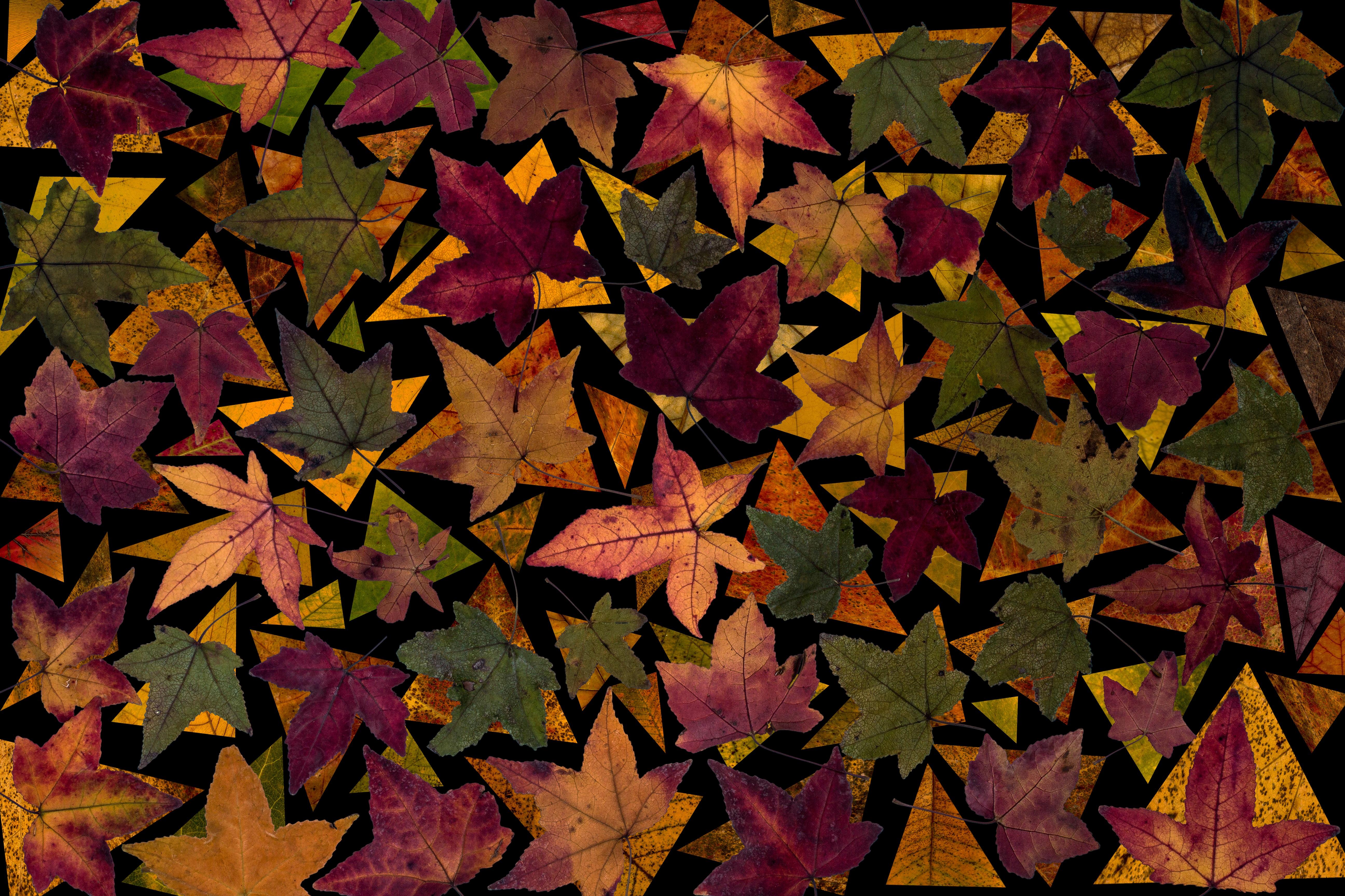 Fotos gratis : rama, textura, flor, patrón, temporada, árbol de arce ...
