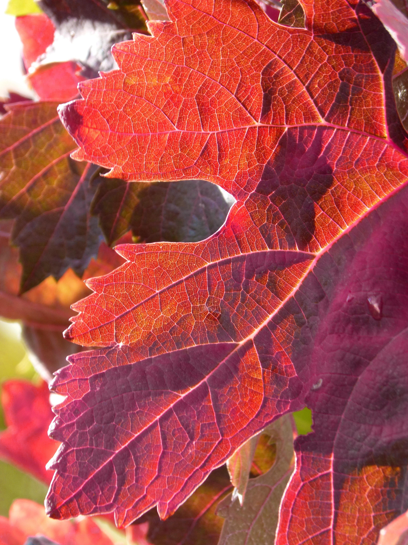 Célèbre Images Gratuites : arbre, branche, fleur, pétale, l'automne  BI73