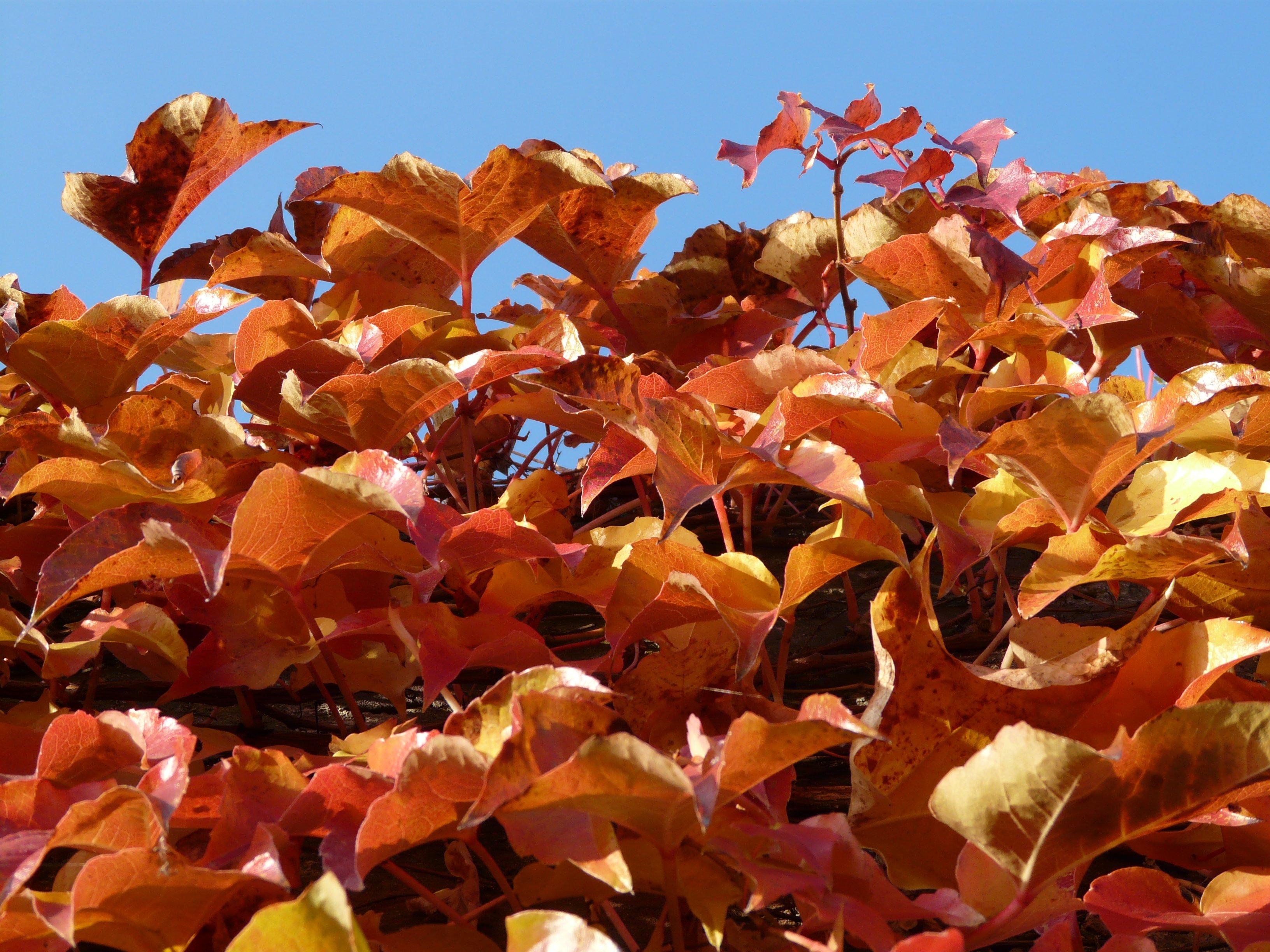 Fotoğraf Ağaç şube Güneş ışığı Yaprak çiçek Taçyaprağı