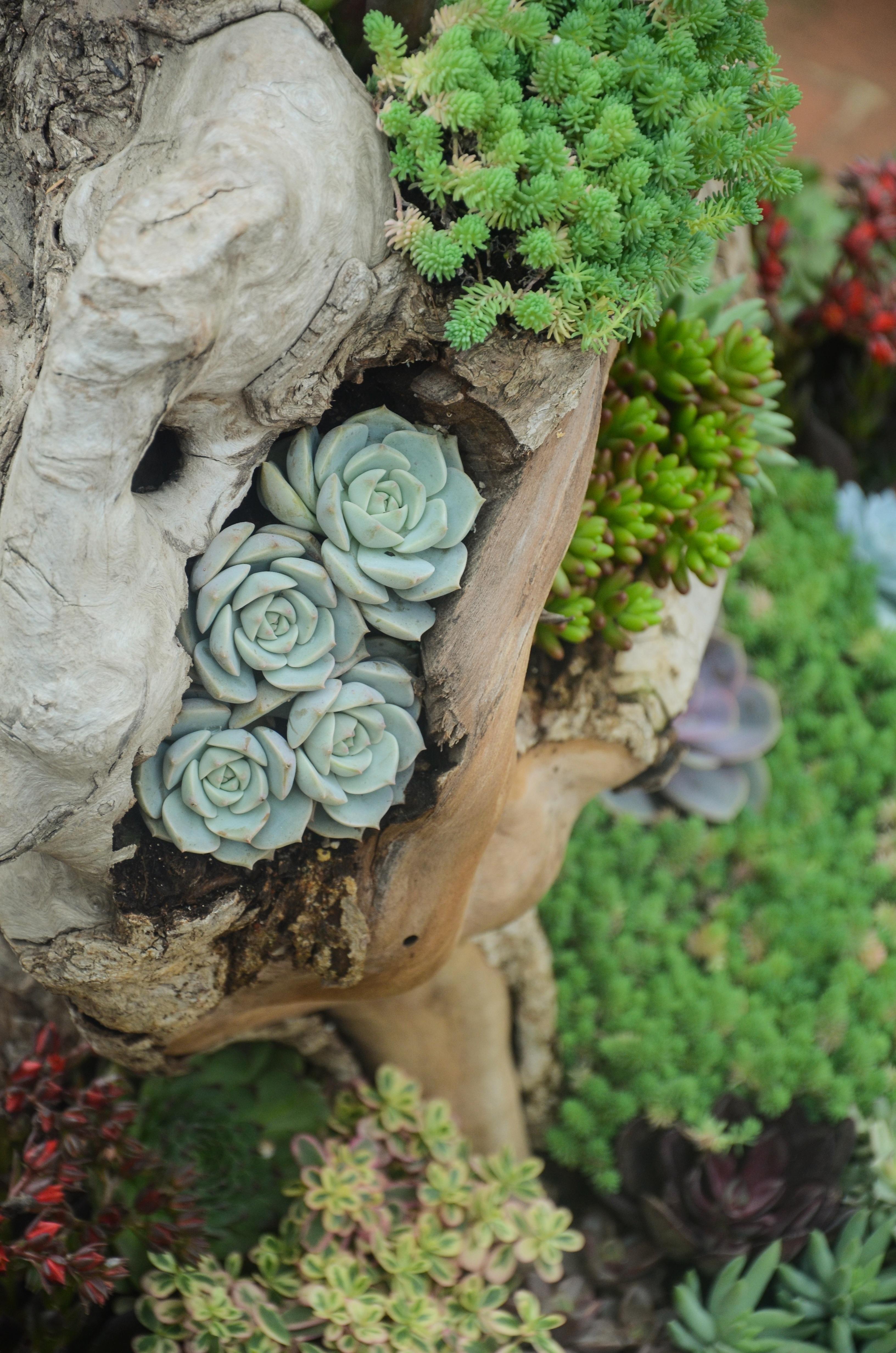 Fotos gratis rbol rama planta madera flor for Arboles florales para jardin