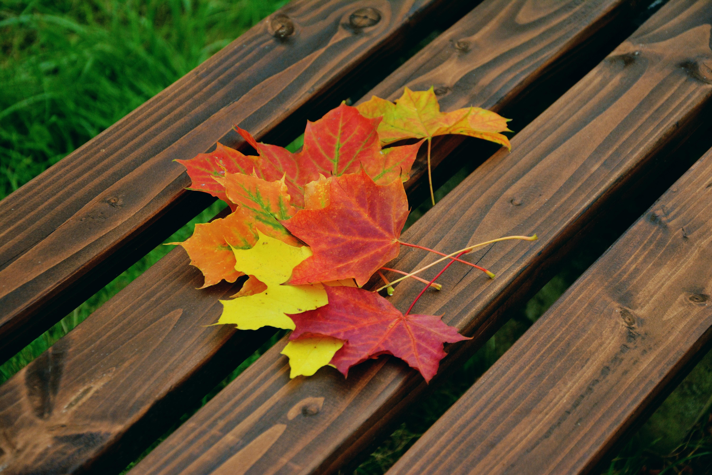 Gambar Cabang Menanam Bunga Musim Gugur Kuning Pohon Maple
