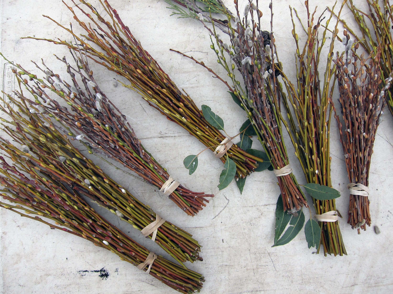 images gratuites : arbre, branche, bois, feuille, fleur, surgir